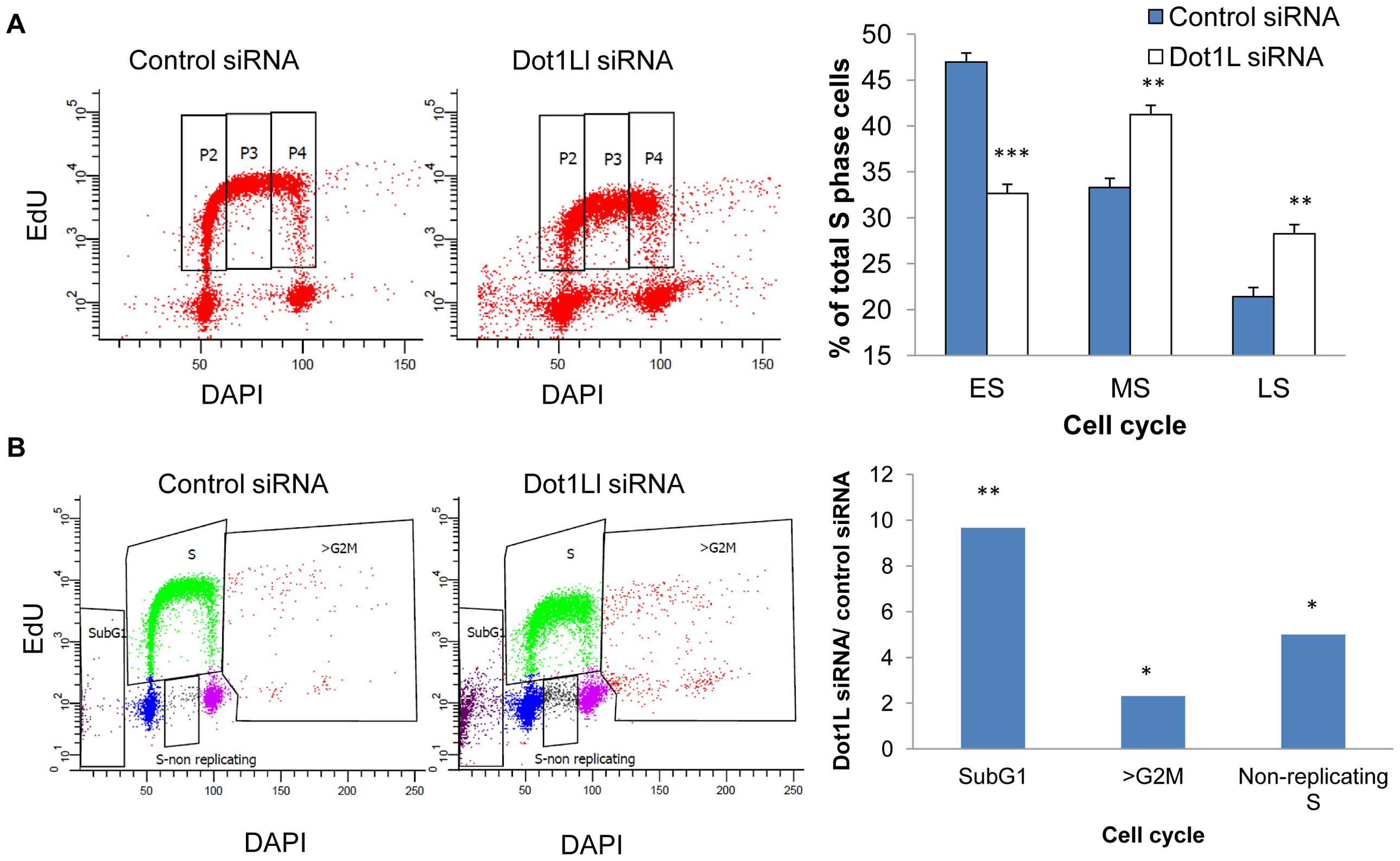 Effects of Dot1L depletion on cell cycle progression.