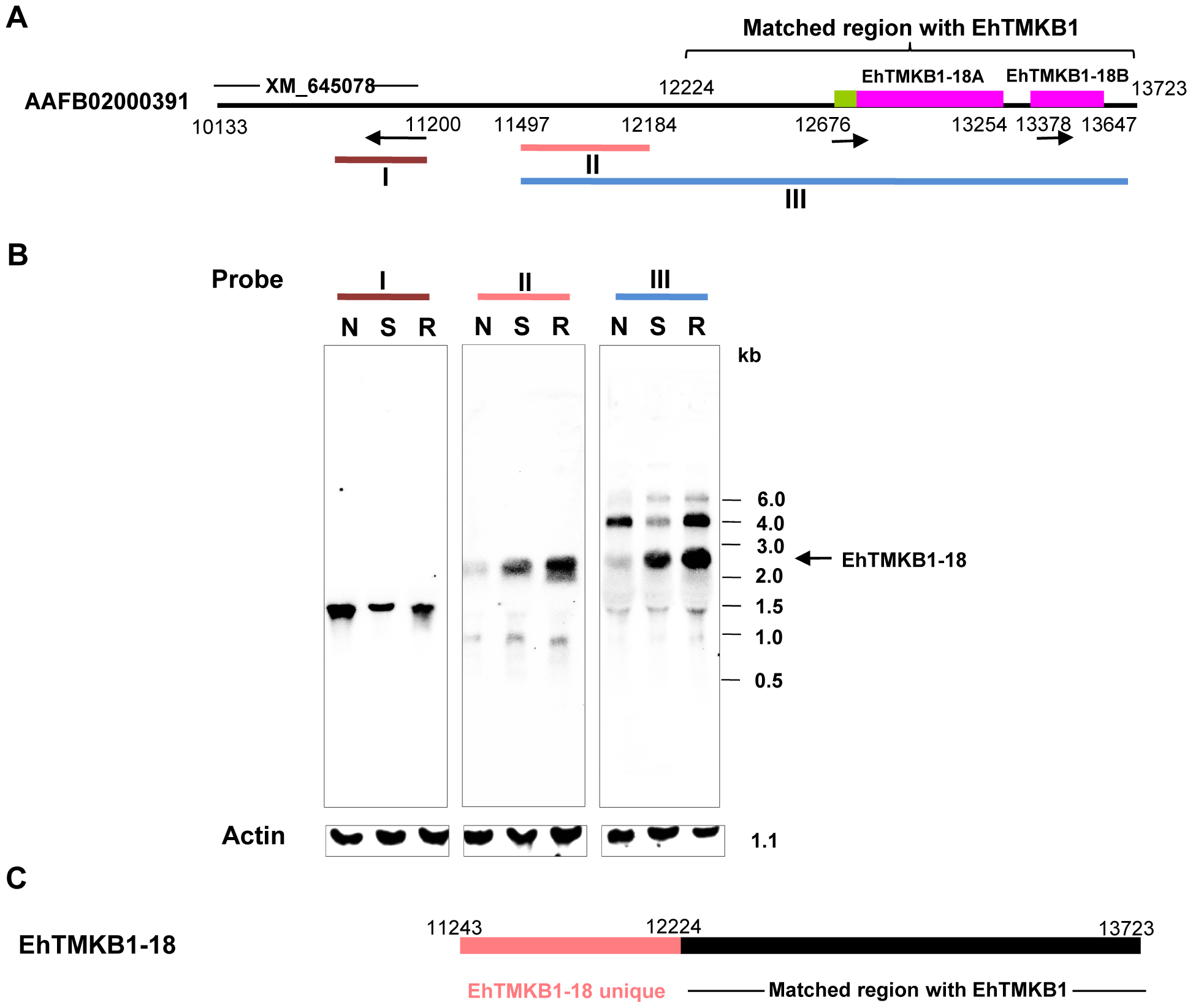 Induction of EhTMKB1-18 expression on serum starvation.