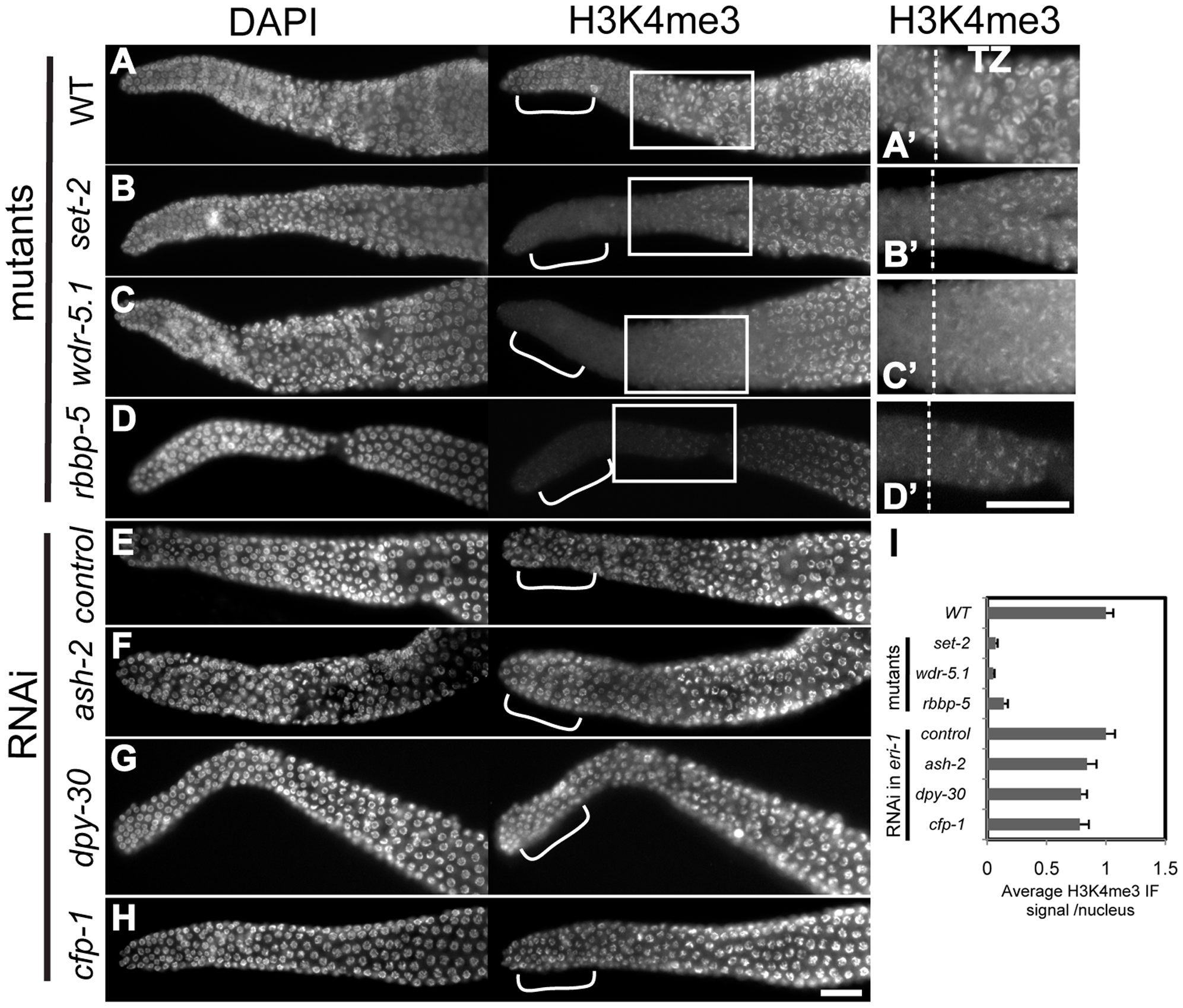 H3K4me3 in adult GSCs is regulated by a subset of Set1/MLL complex components.