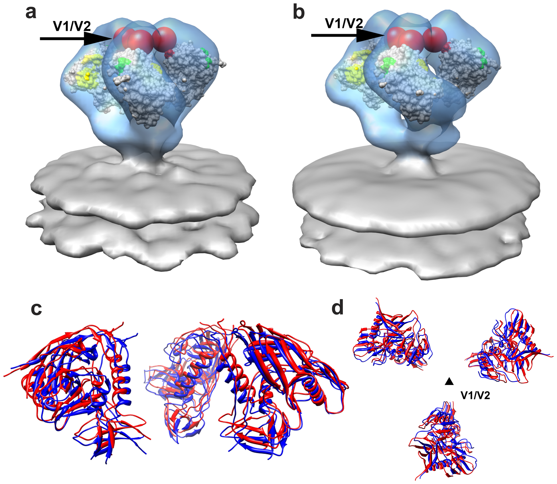 Molecular architecture of trimeric SIV Env.