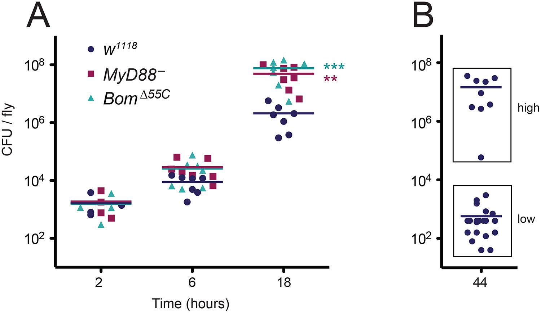 Deletion of the 55C <i>Bom</i> genes impairs resistance to <i>E</i>. <i>faecalis</i> infection rather than tolerance.