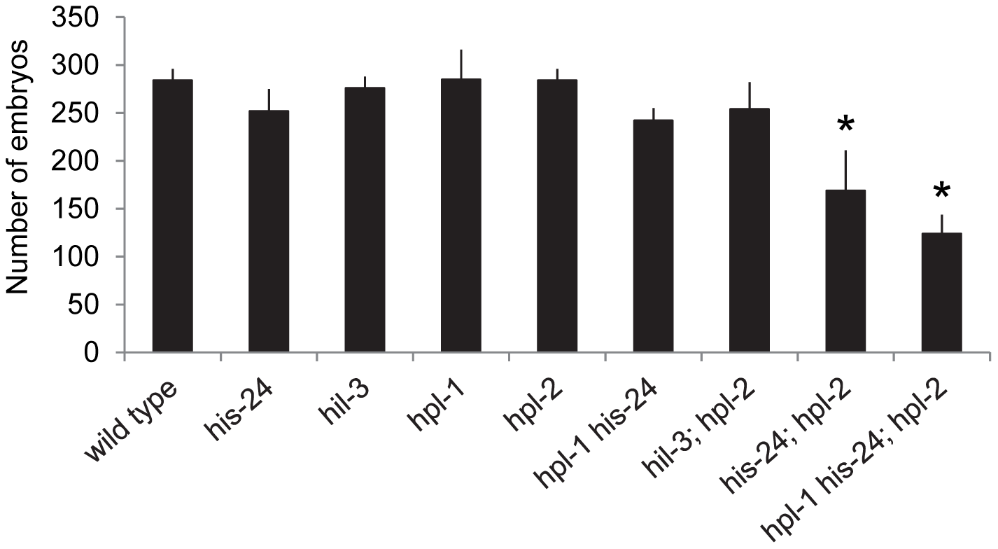 HIS-24 act synergistically with the <i>hpl</i>-genes to control brood size at 21°C.