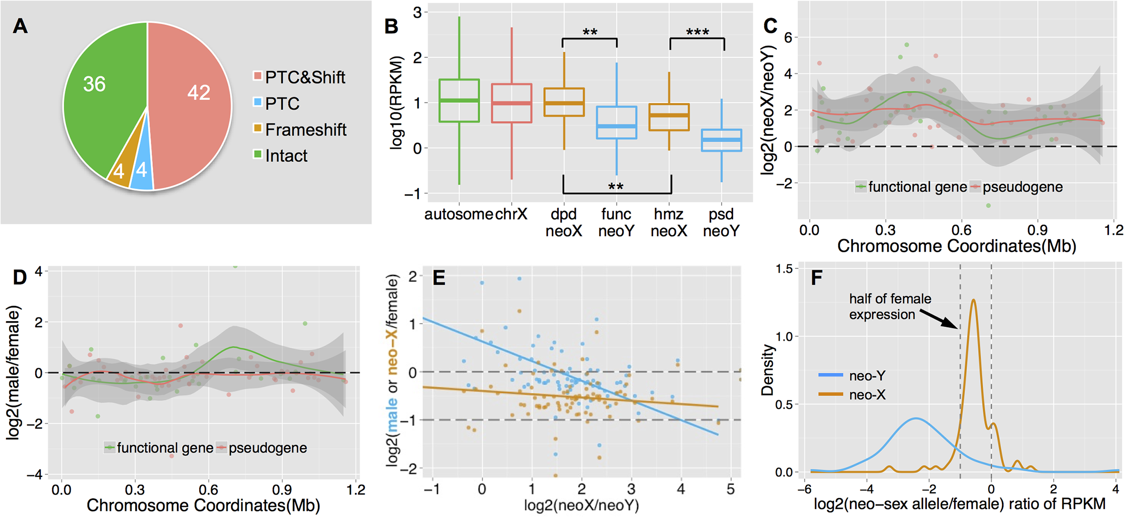 Functional degeneration of neo-Y genes.