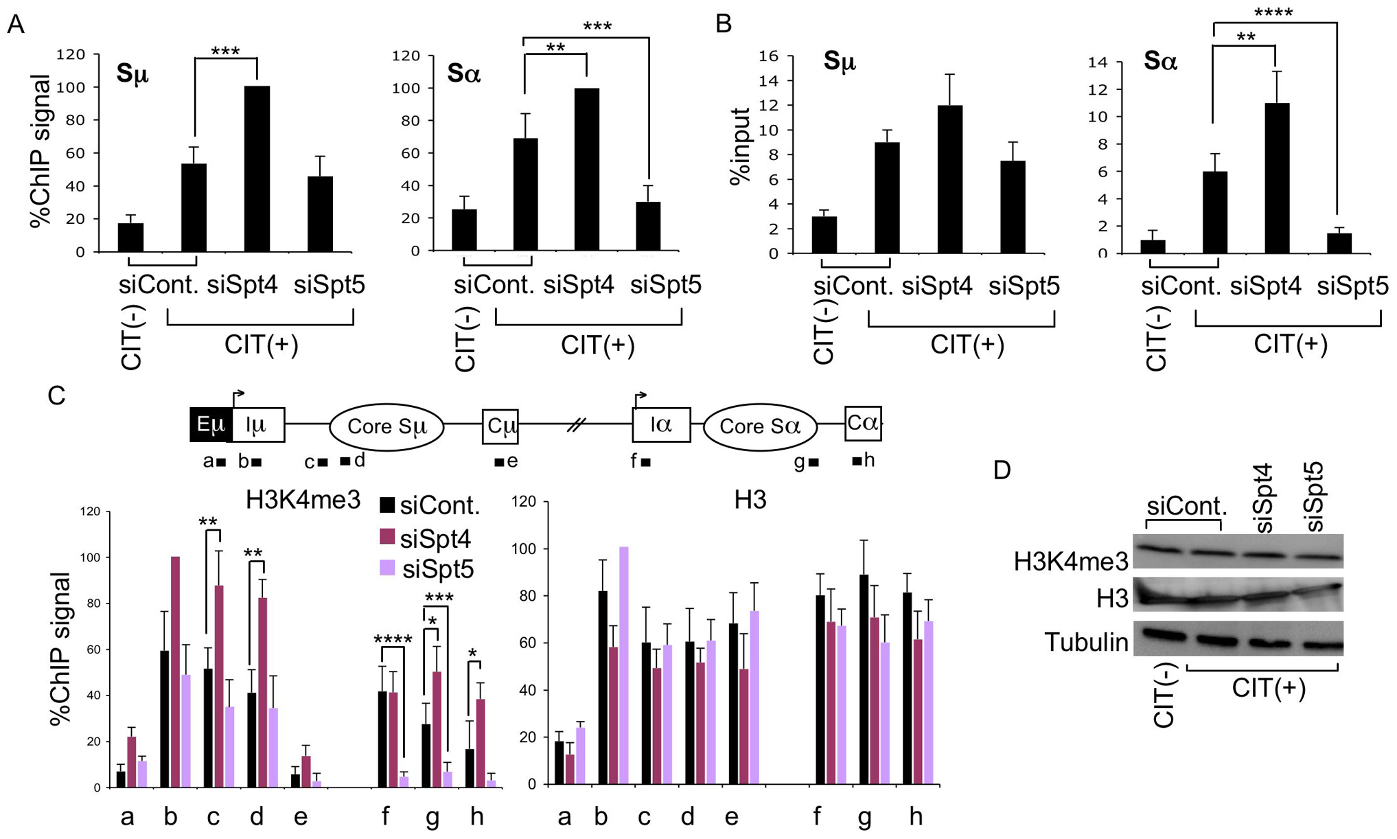 Spt4 and Spt5 differentially control S region DNA cleavage and H3K4me3 status.
