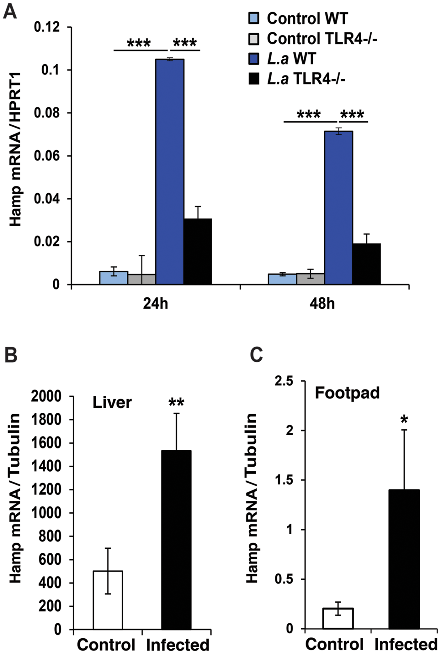 <i>L. amazonensis</i> infection enhances hepcidin expression in macrophages in a TLR4 dependent manner.