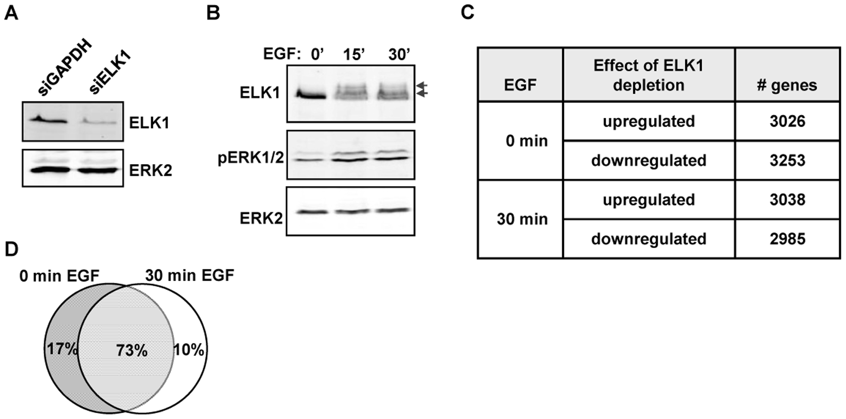 Depletion of ELK1 affects gene expression.