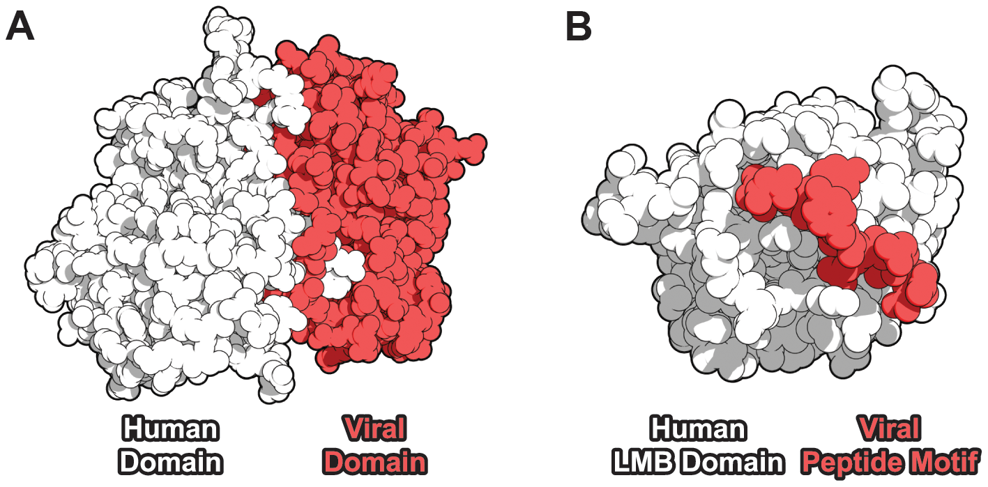 Domain-centric mechanisms of host-virus protein-protein interaction.