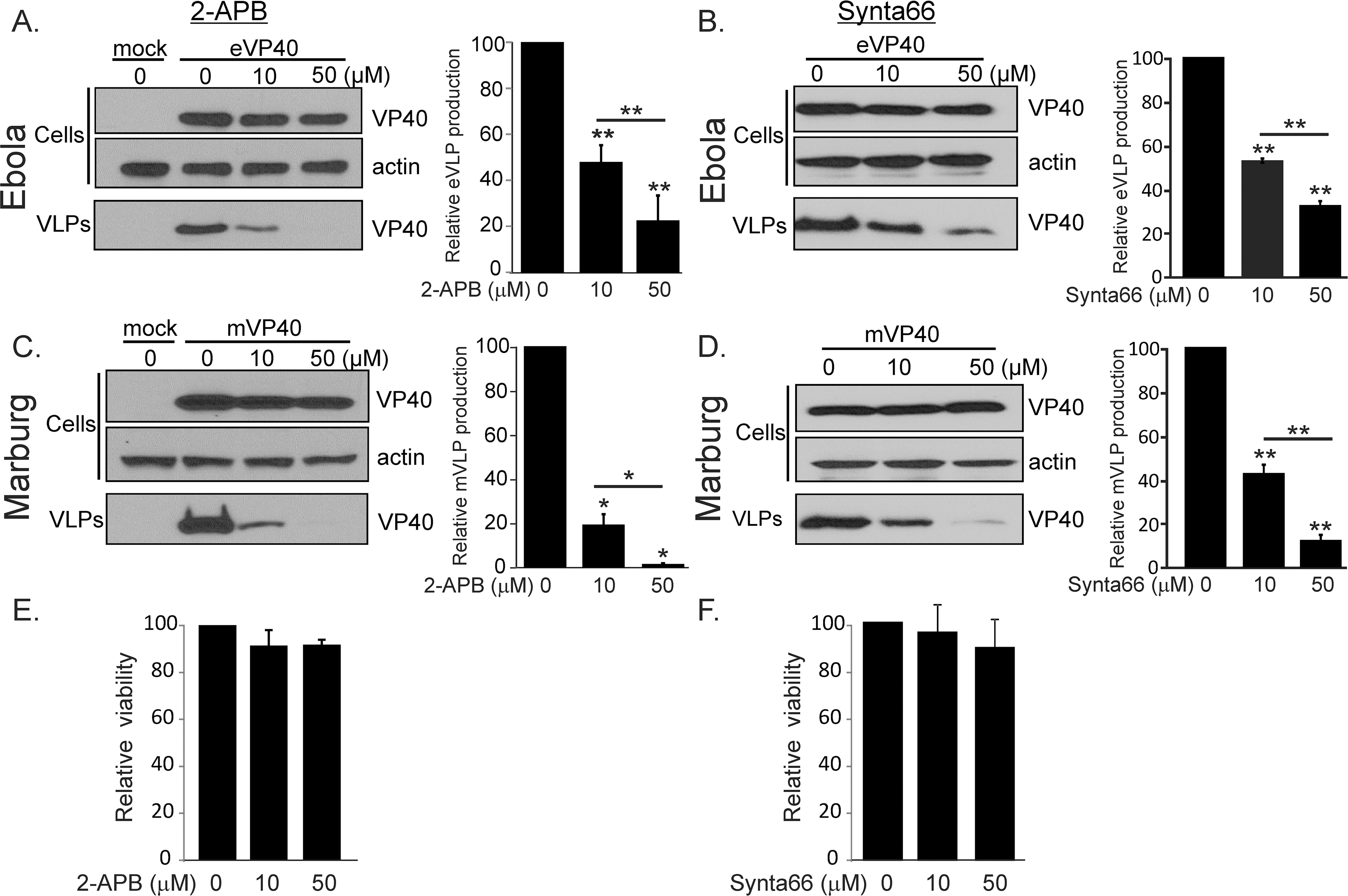 Pharmacological effect of Synta66 and 2-APB on egress of filovirus VLPs.