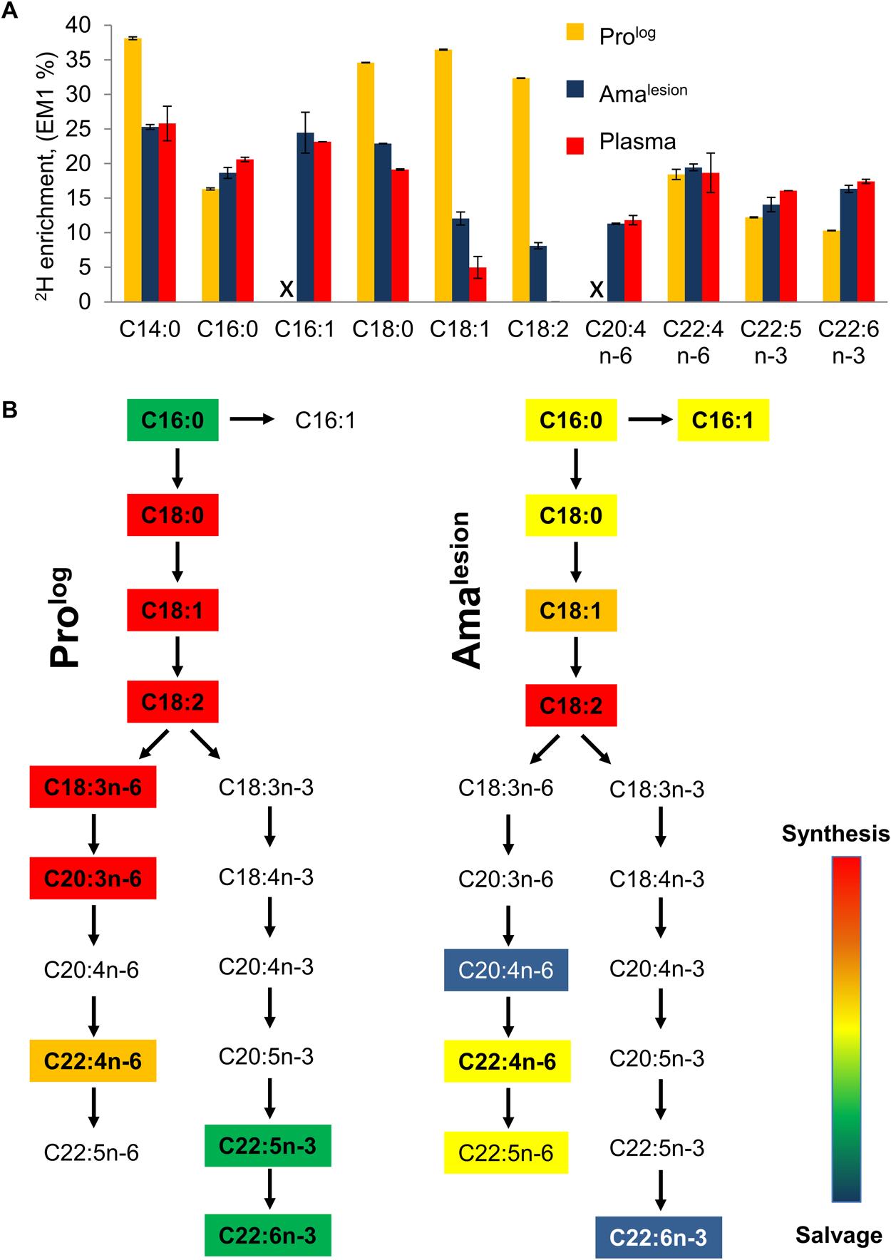 Lesion amastigotes utilize both salvage and <i>de novo</i> biosynthetic pathways to supply their fatty acid needs.