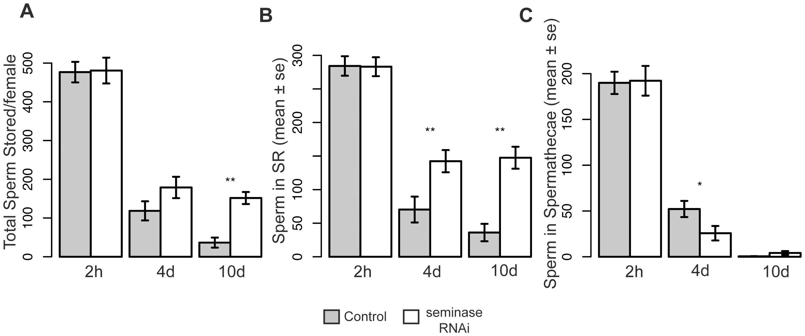 Females mated to seminase knockdown males retain more sperm 4 and 10 days after mating.