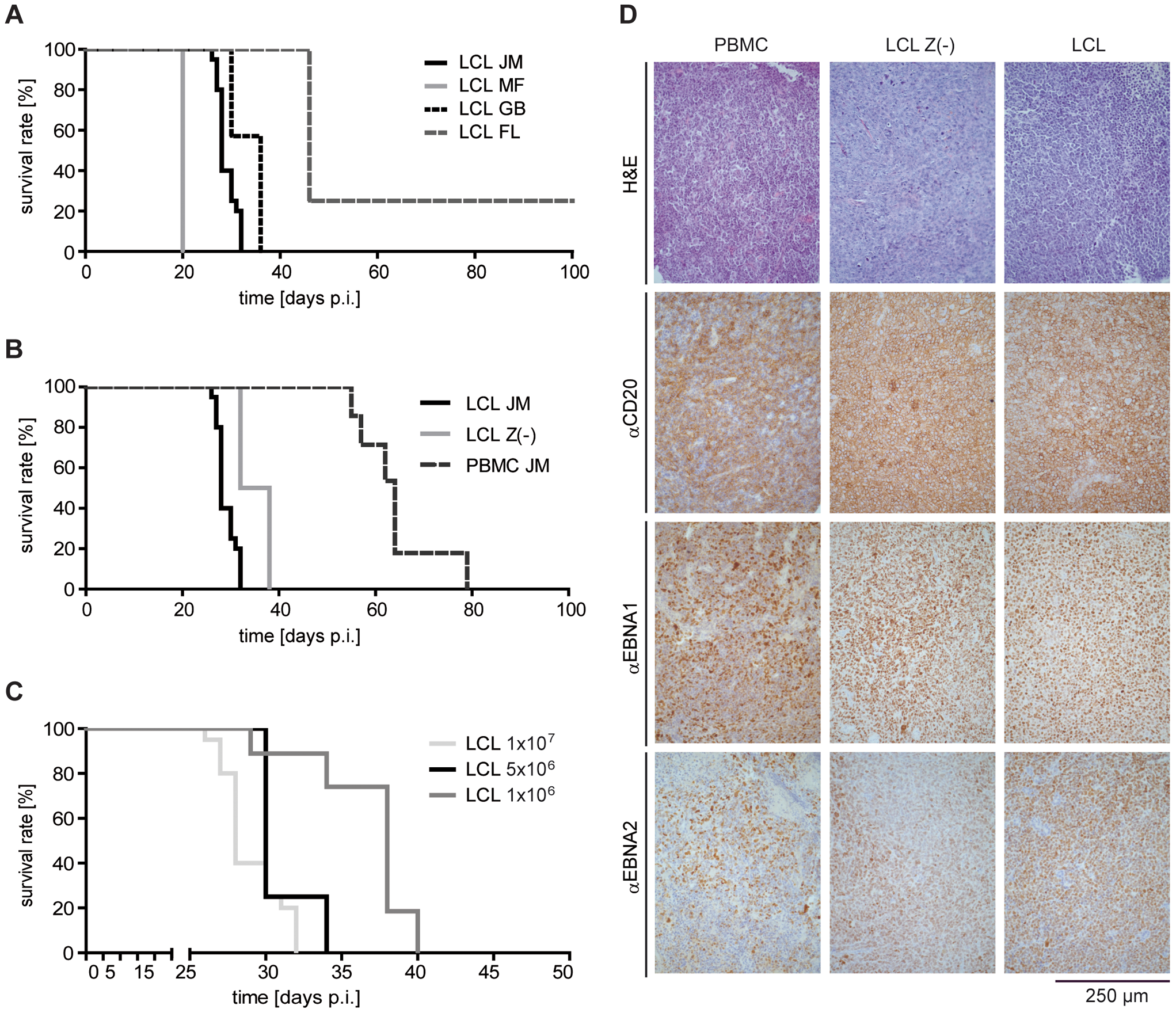 Induction of human PTLD-like tumors in immunodeficient mice.