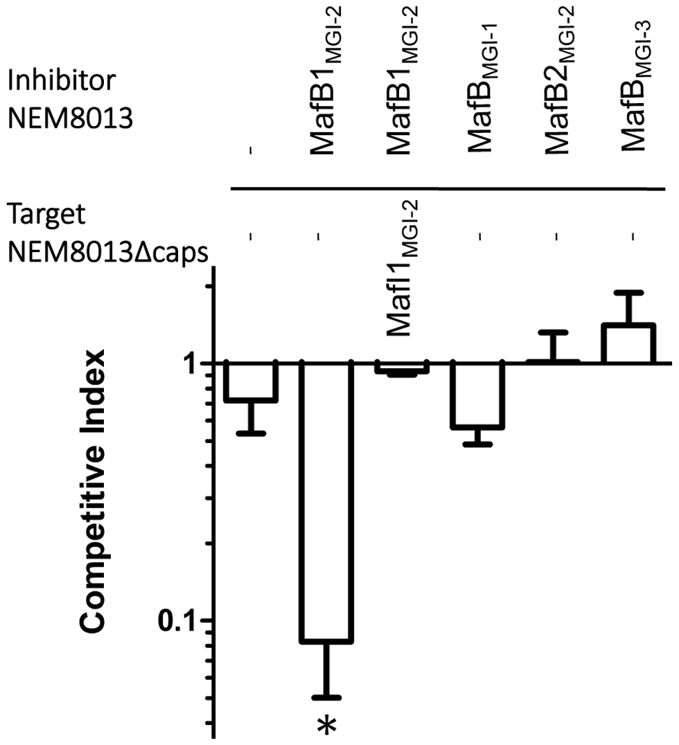 MafB1<sub>MGI-2NEM8013</sub> provides an advantage in competition assay.