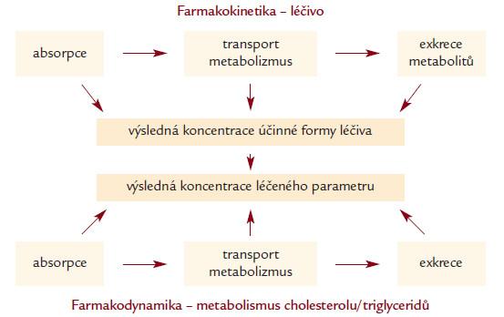 Schematické znázornění farmakokinetiky a farmakodynamiky hypolipidemické léčby. Genetické varianty mohou ovlivnit všechny jednotlivé kroky.