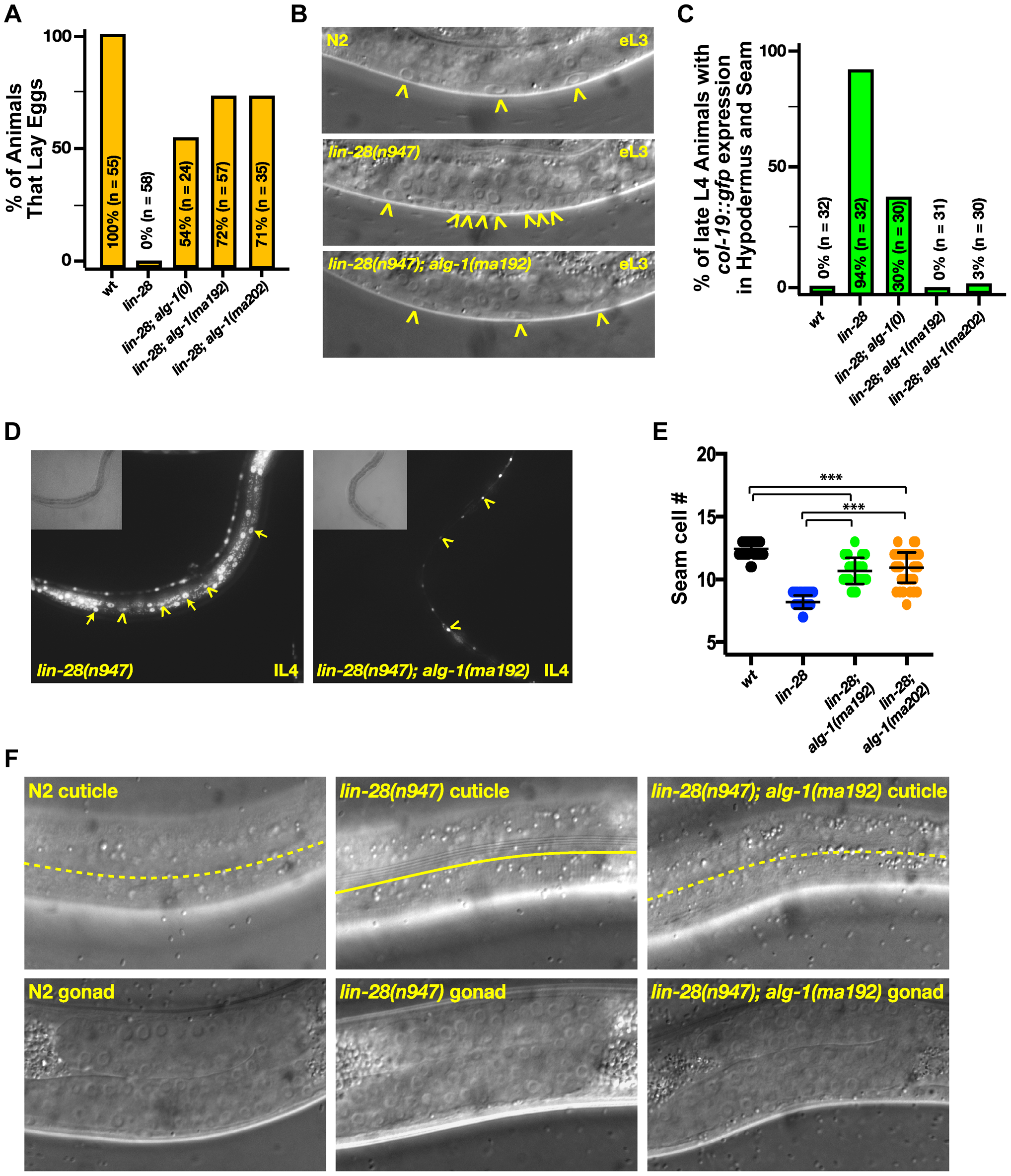 Mutations in <i>alg-1</i> suppress precocious development of <i>lin-28(lf)</i> (<i>lin-28(n947)</i>) animals.