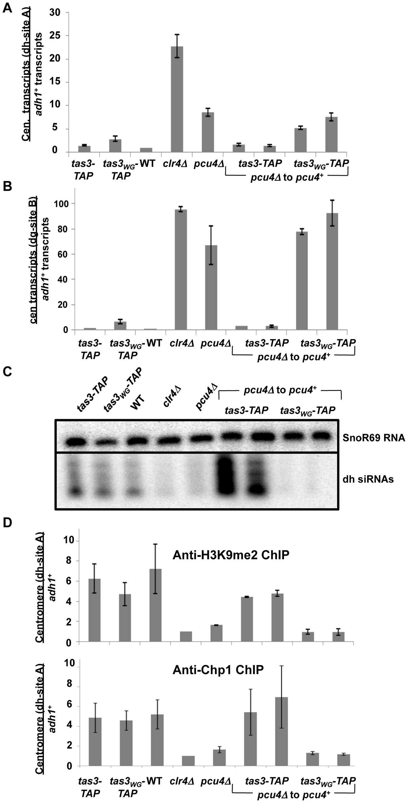 Pcu4 is required for establishment of repressive centromeric heterochromatin.