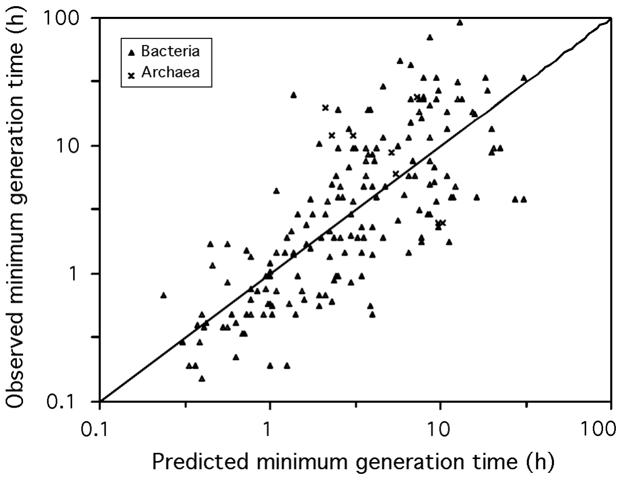 Observed versus predicted minimum generation time.