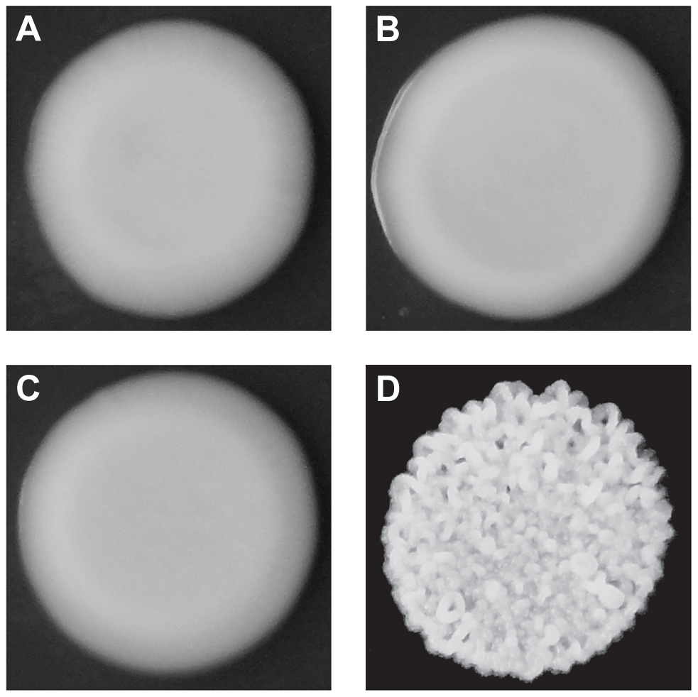 Colony morphologies of parents and cross progeny on rich medium containing ethanol.