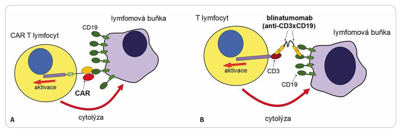 Protinádorové působení CAR T lymfocytů (A) a blinatumomabu (B).