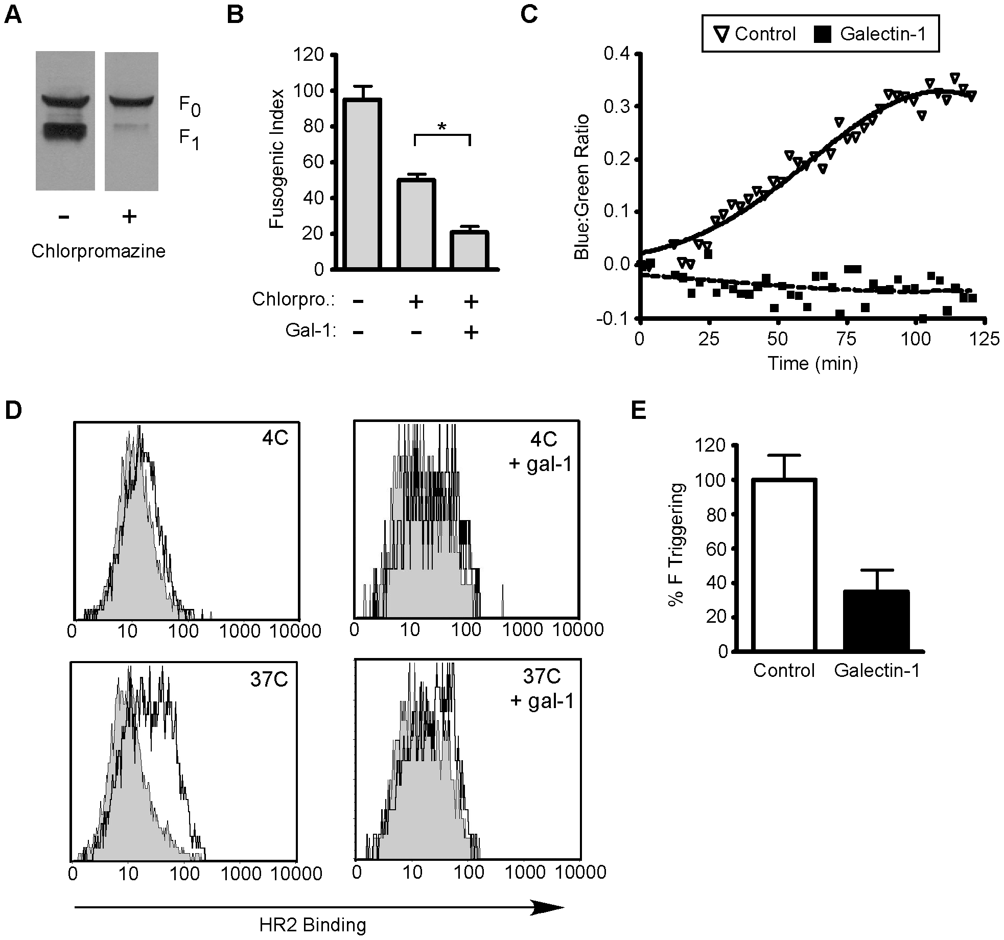 Galectin-1 inhibits function of mature NiV-F.