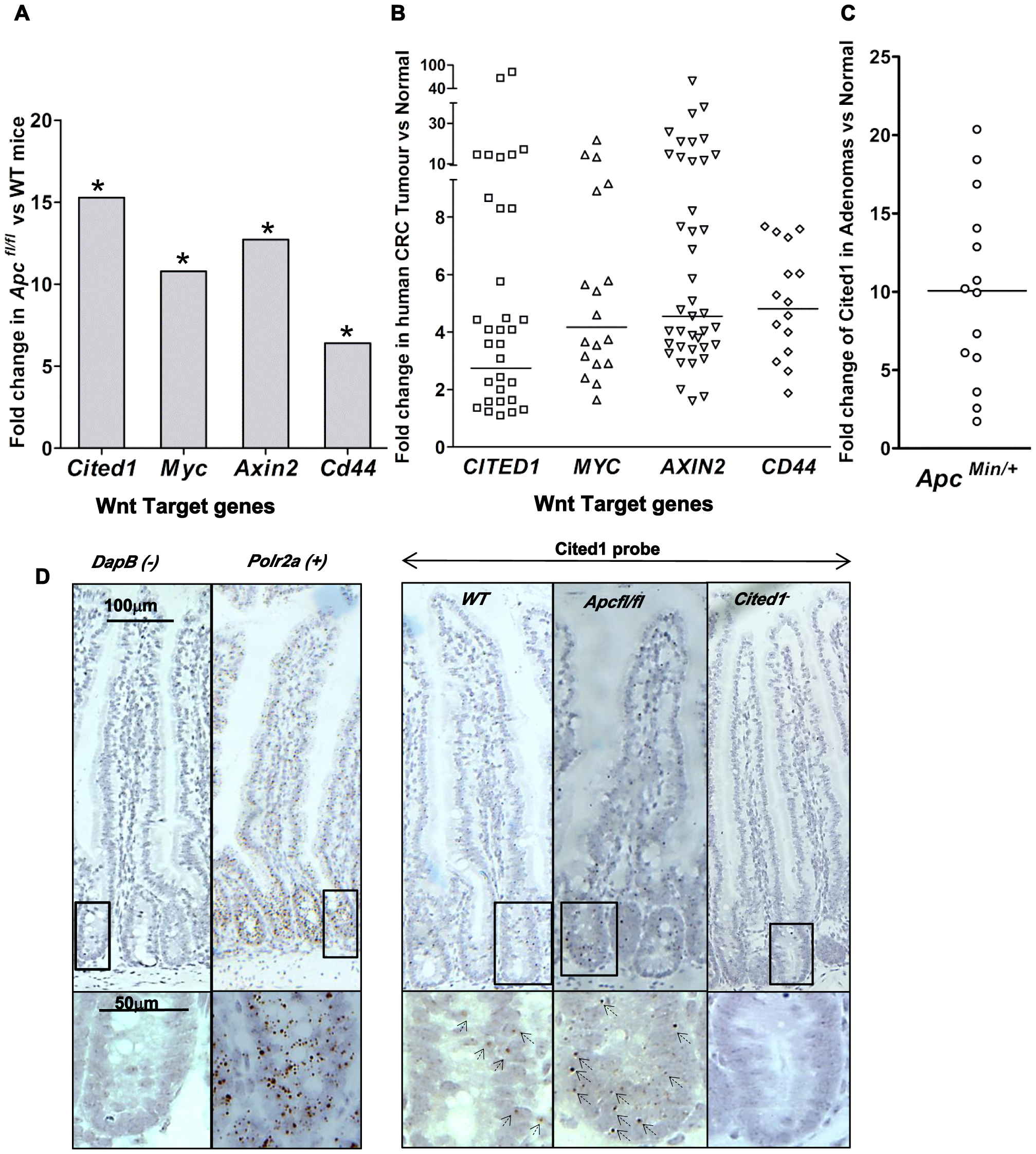 <i>Cited1</i> over-expression in <i>Apc<sup>Min/+</sup></i> mice, <i>AhCre<sup>+</sup>Apc<sup>fl/fl</sup></i> mice and human colorectal cancer.