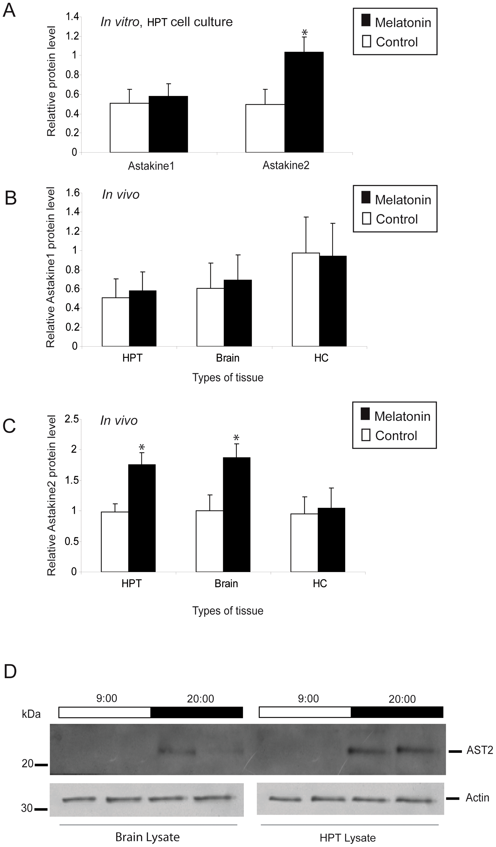Melatonin induces higher AST2 protein levels <i>in vitro</i> and <i>in vivo</i>.