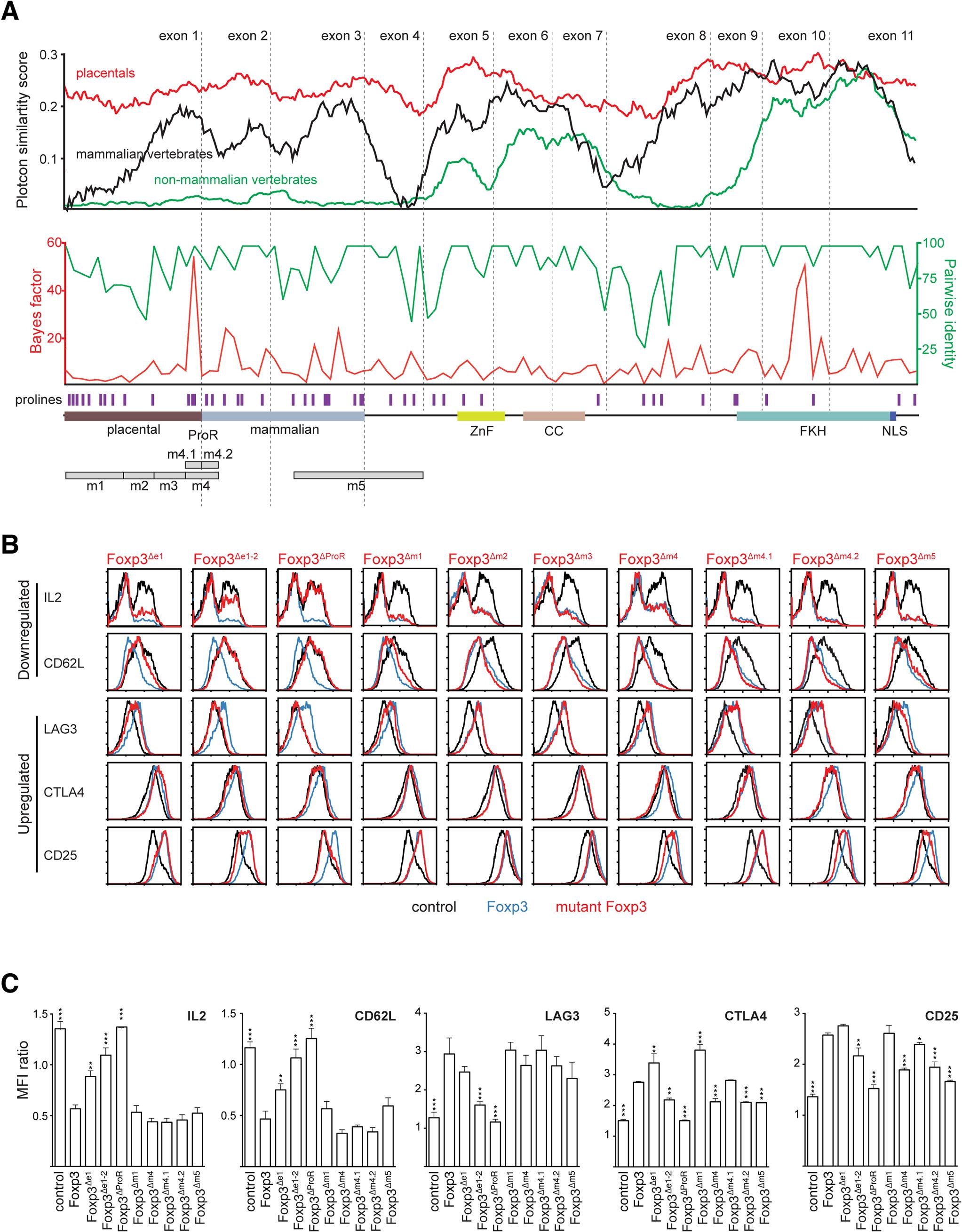 Mutational dissection of ProR of Foxp3 reveals distinct mechanisms of gene regulation.