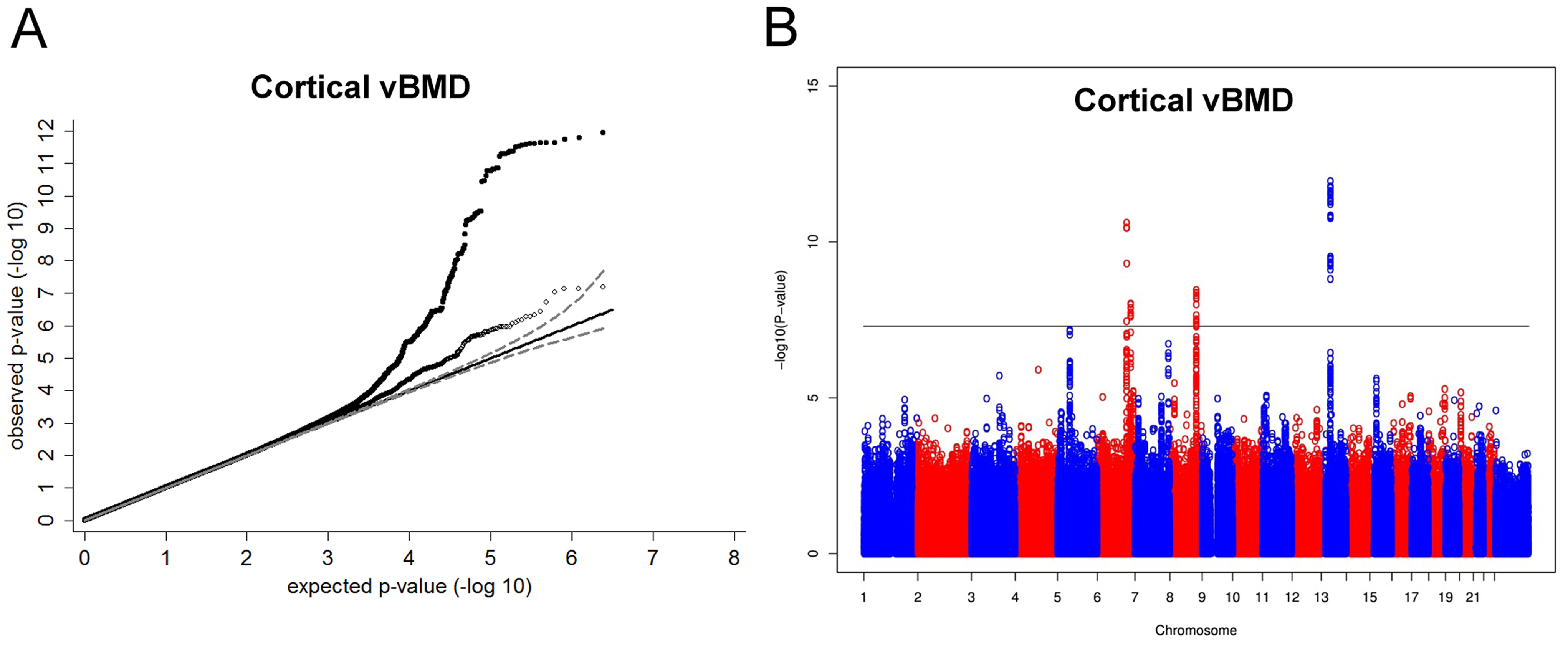 Genome-wide meta-analysis of cortical vBMD.