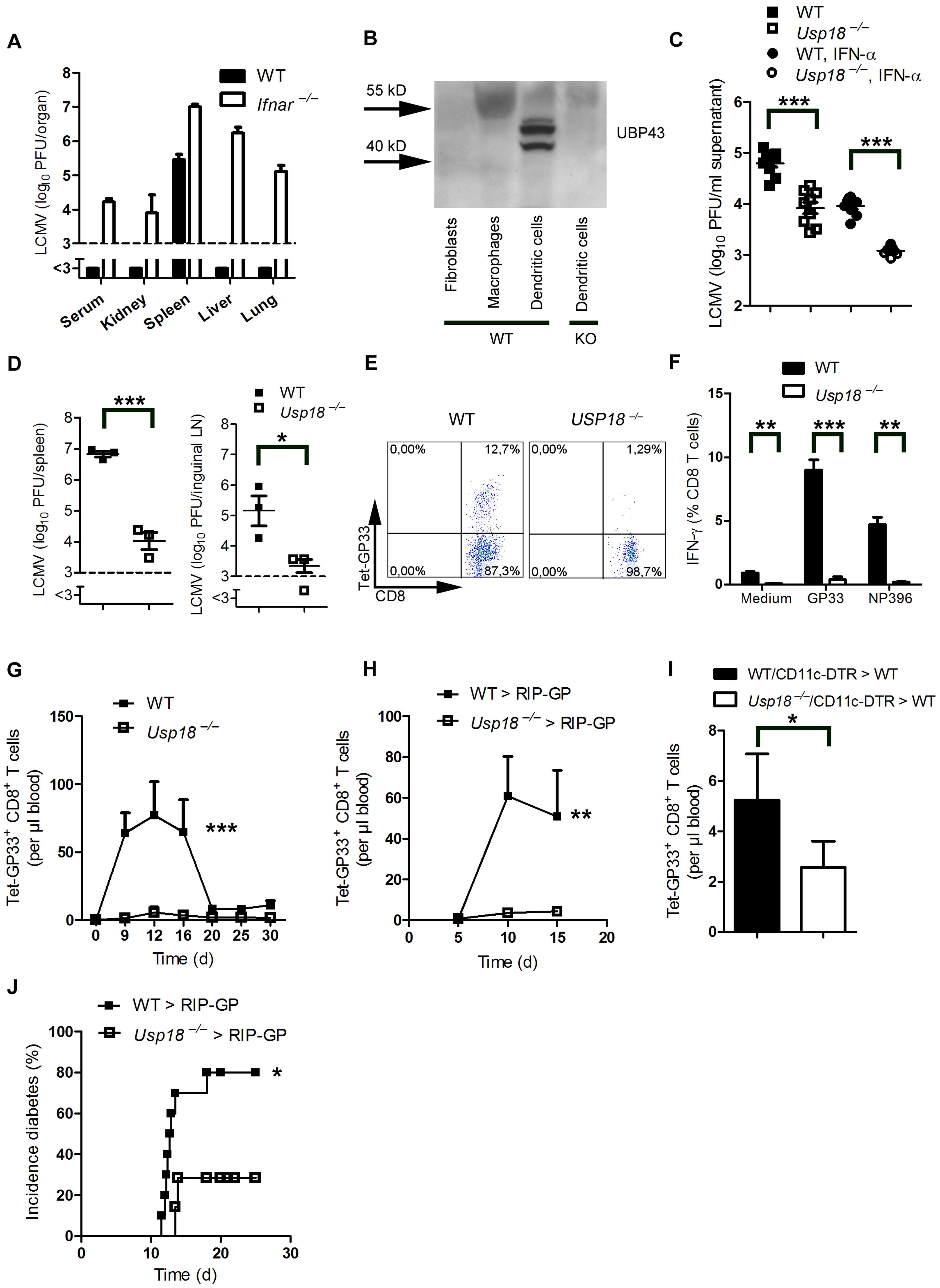 Expression of <i>Usp18</i> in dendritic cells guarantees early viral replication and onset of autoimmune diabetes.