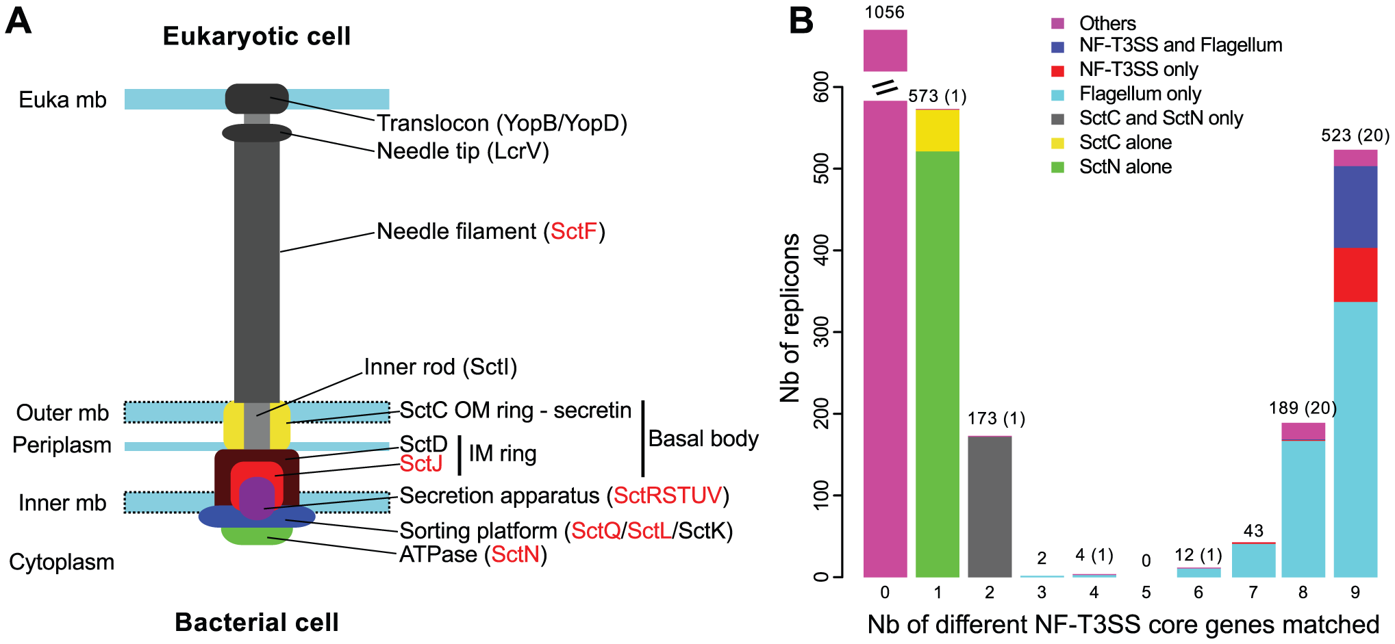Identification of T3SS core genes in complete genomes.