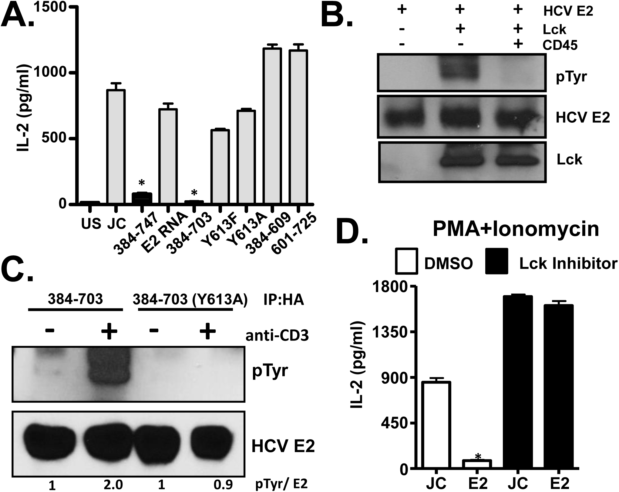 HCV E2 protein inhibits distal T cell receptor (TCR) signaling.
