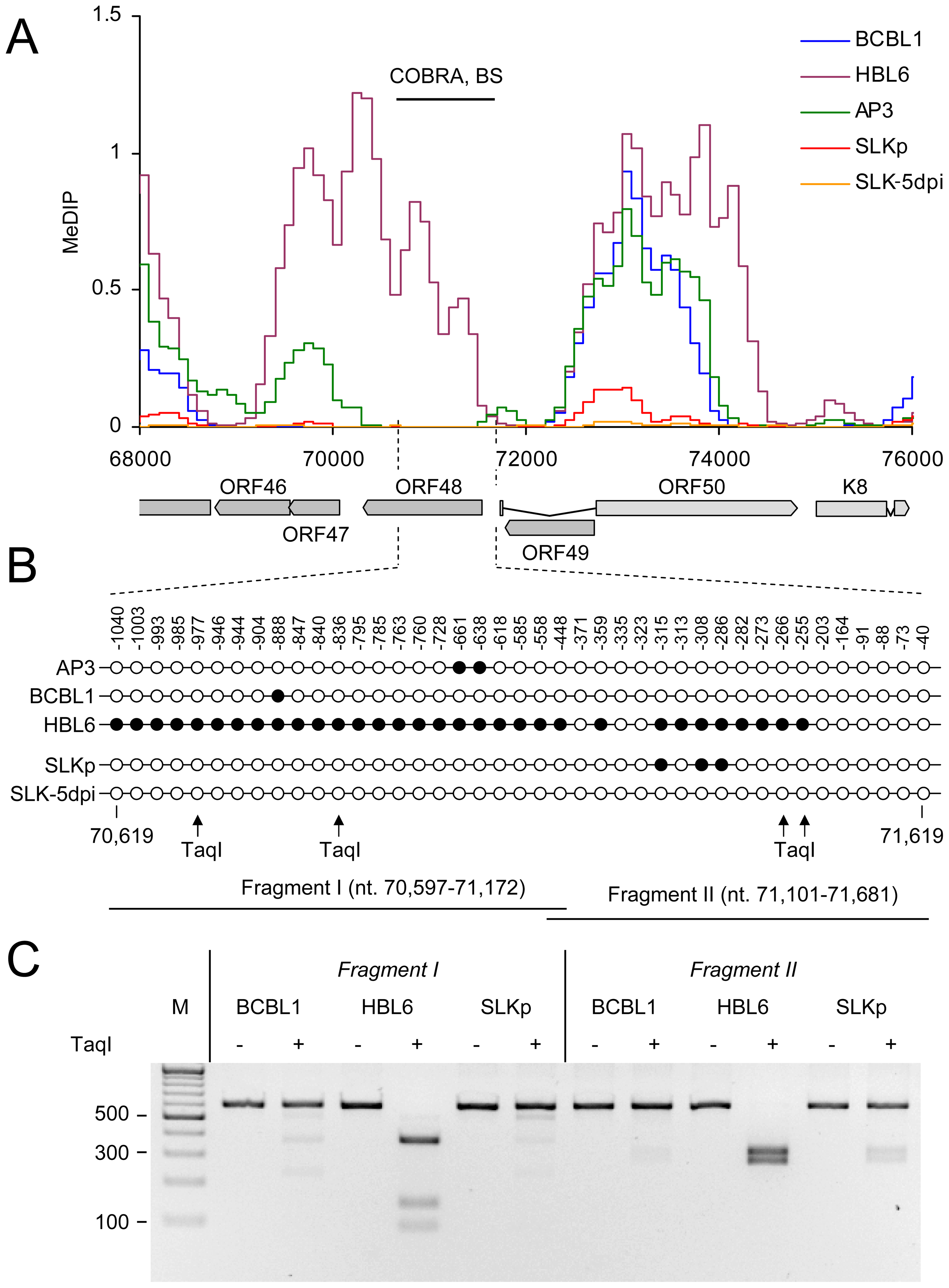 DNA Methylation at the ORF50 promoter.