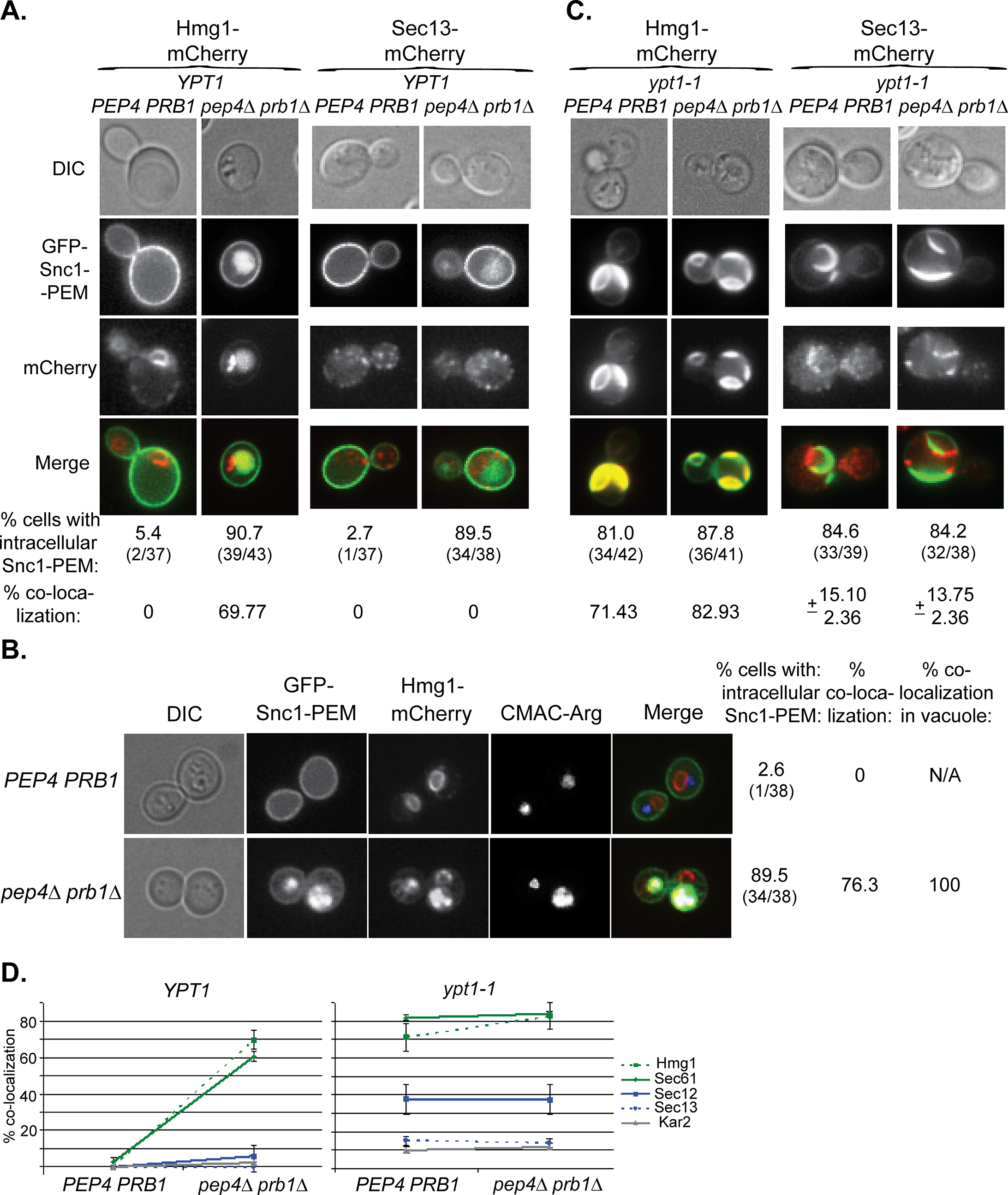 Live-cell microscopy analysis of ER-resident proteins upon overexpression of GFP-Snc1-PEM.