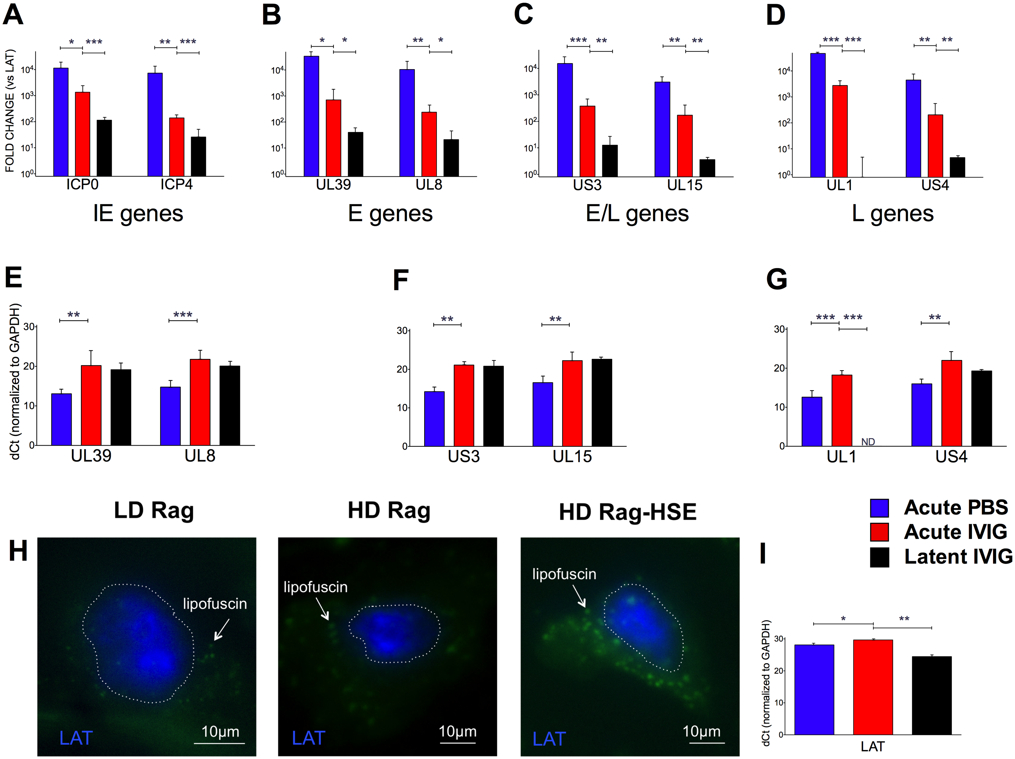 Acute and latent gene expression in HD infected B6-Rag trigeminal ganglia.