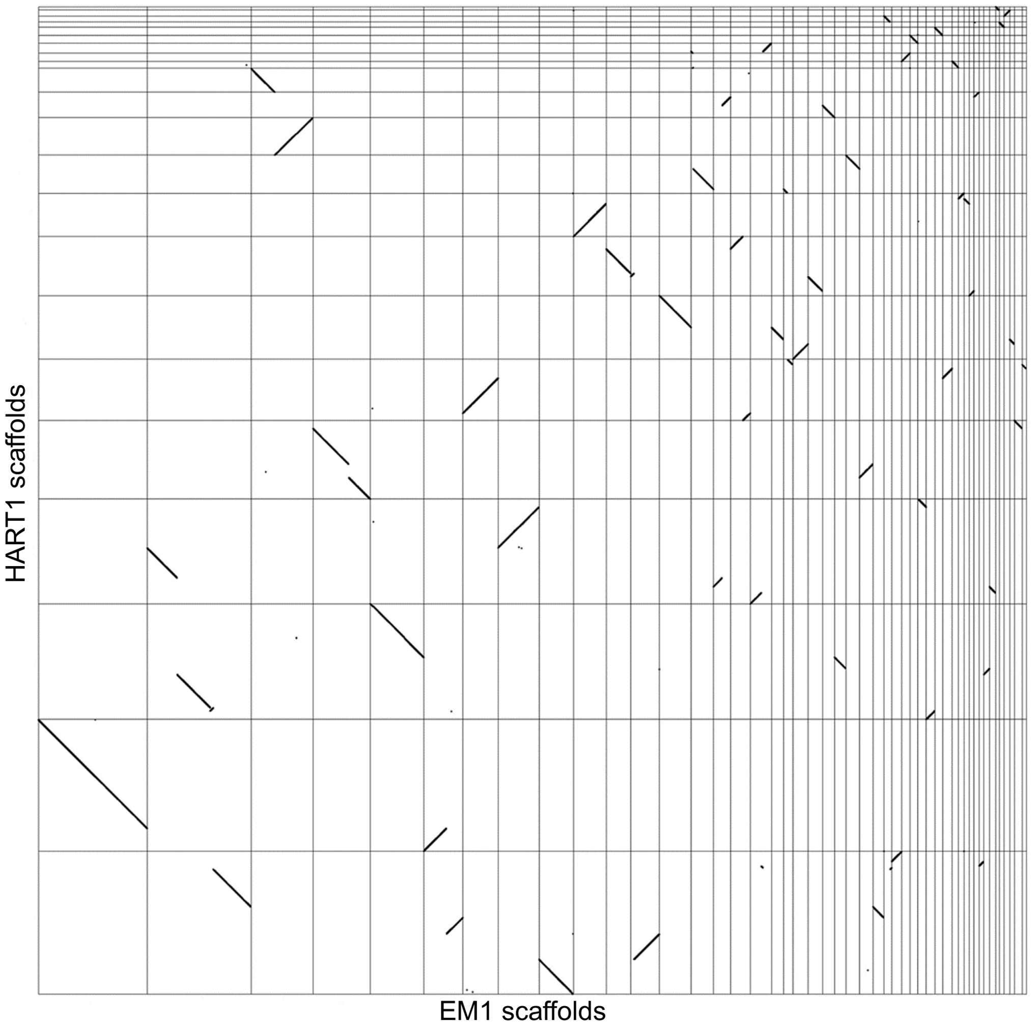 Synteny between <i>Phytomonas</i> EM1 and HART1 genomes.