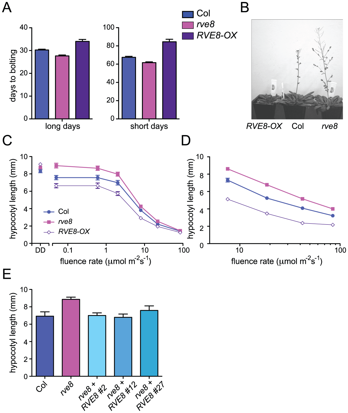 RVE8 affects seedling growth and flowering time.