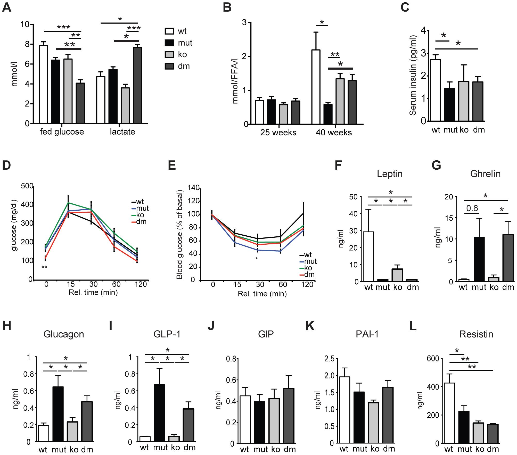 Characterization of blood metabolites in wild type (wt), mtDNA mutator (mut), UCP2-deficient wild type (ko) and mtDNA mutator (dm) mice.