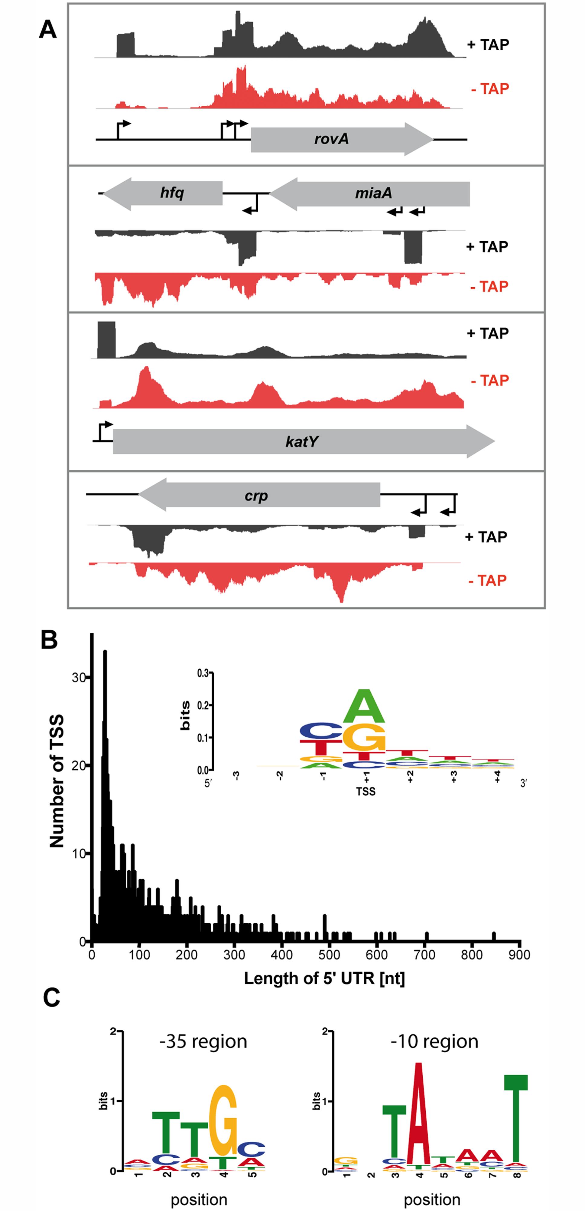 Global identification of mRNA transcriptional start sites (TSSs).