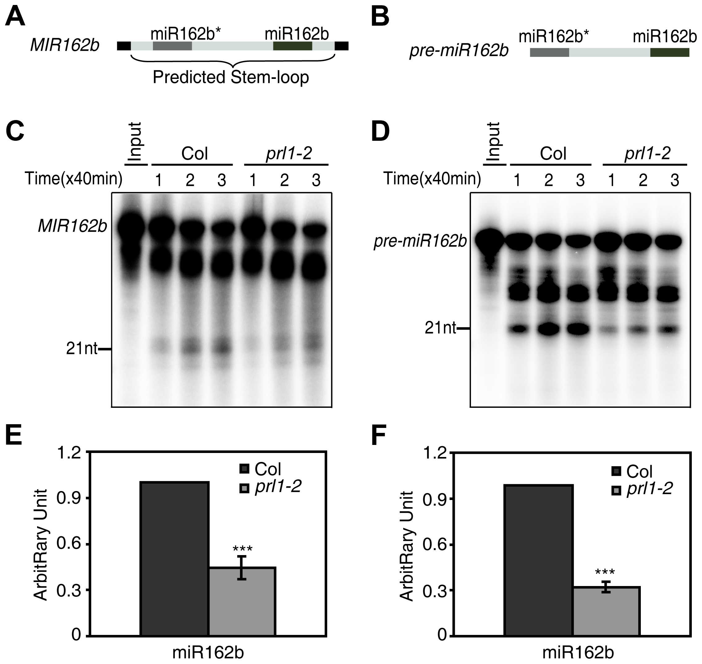 PRL1 is required for miRNA maturation <i>in vitro</i>.