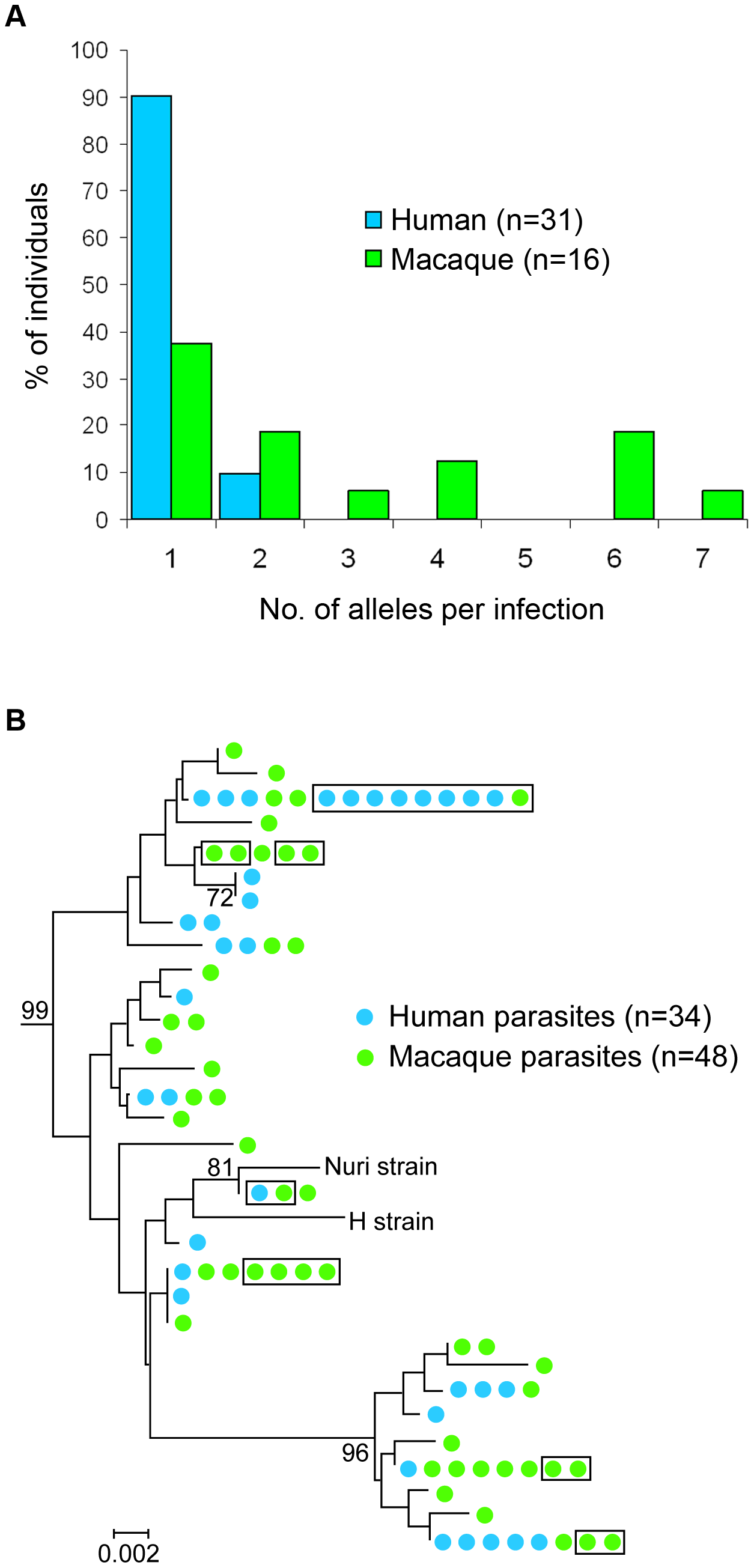 Analyses of <i>P. knowlesi csp</i> gene sequences from infections of macaques and humans.