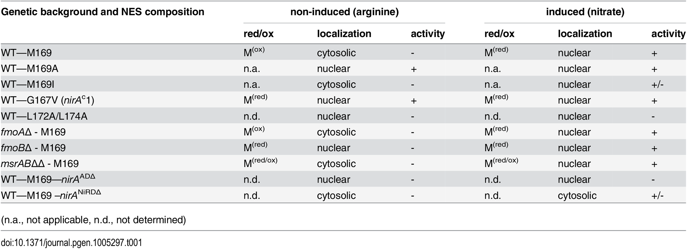 Overview of correlations between NES sequences, oxidation status of M169 (red/ox), NirA-GFP subcellular localization and NirA transcriptional activity in different genetic backgrounds of strains grown under non-inducing or inducing conditions.
