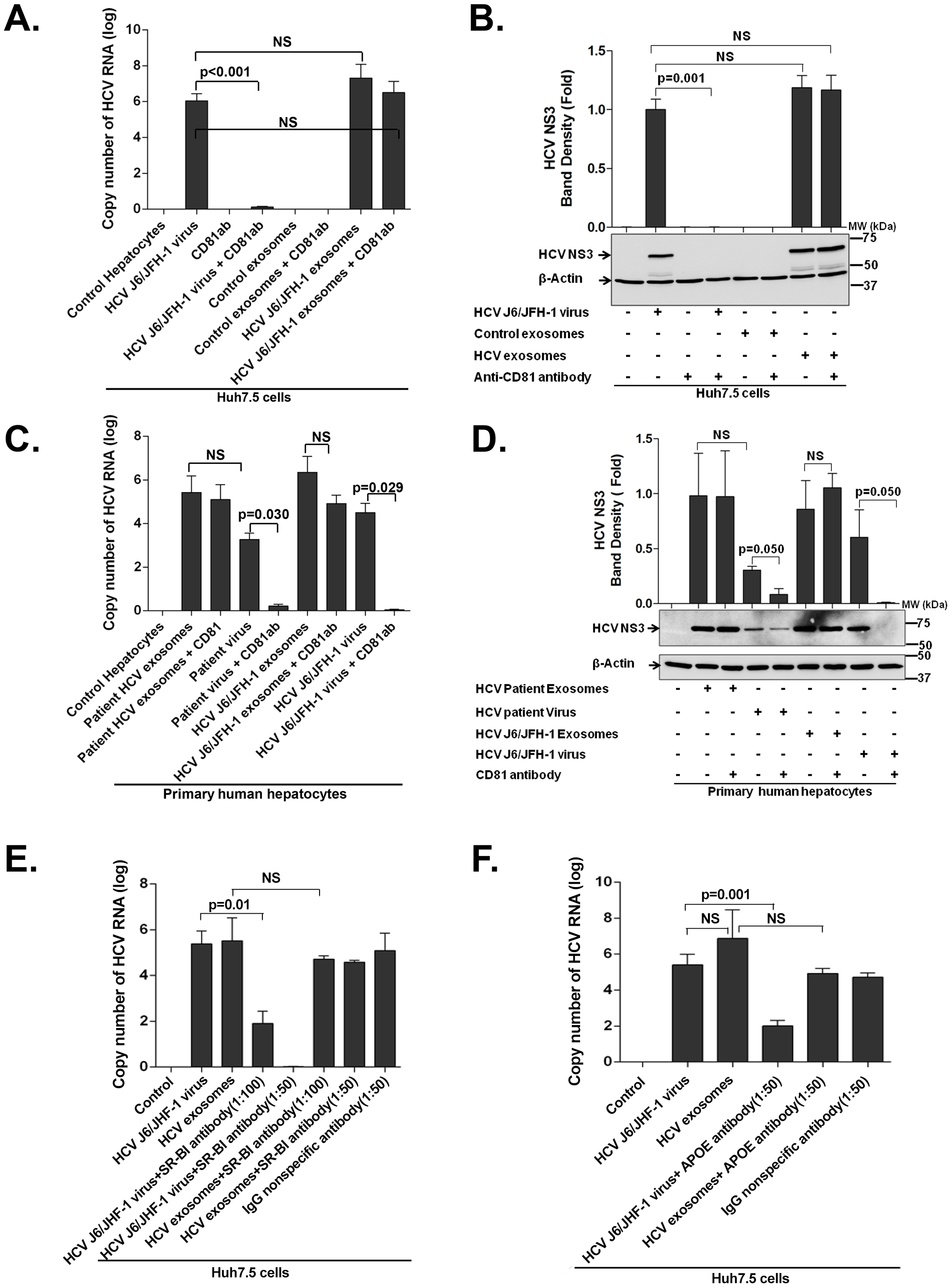 Exosomes from HCV J6/JFH-1 infected Huh7.5 cells and HCV patients mediate effective HCV transmission in the presence of anti-CD81, anti-SB-RI or anti-APOE antibody.