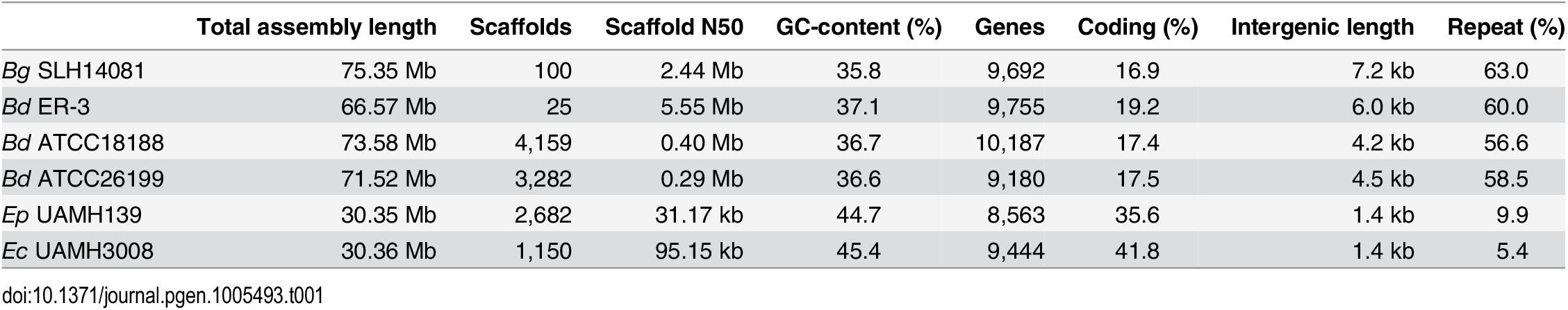 Assembly and annotation statistics for <i>Blastomyces</i> and <i>Emmonsia</i> genomes.