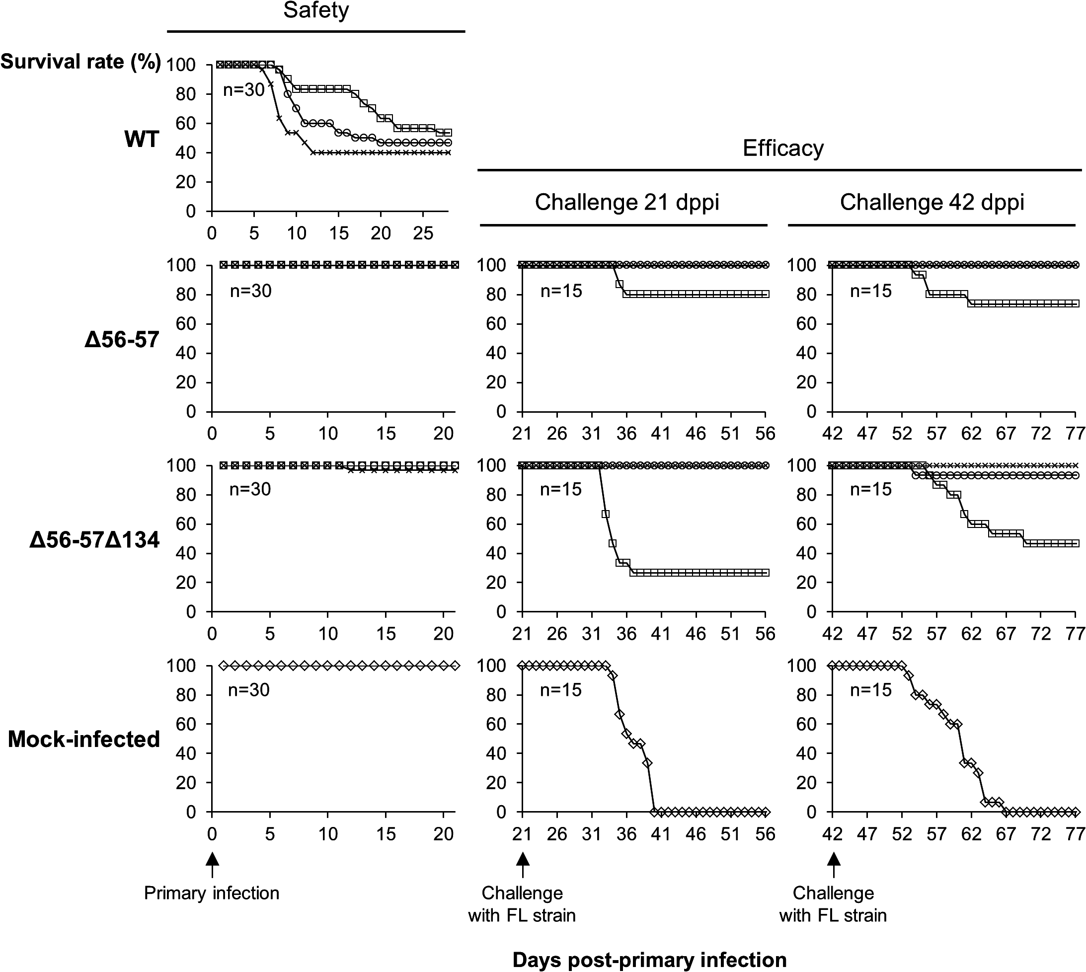 Safety-efficacy profile of double Δ56-57 and triple Δ56-57Δ134 deleted recombinants encoding a wild-type TK locus.