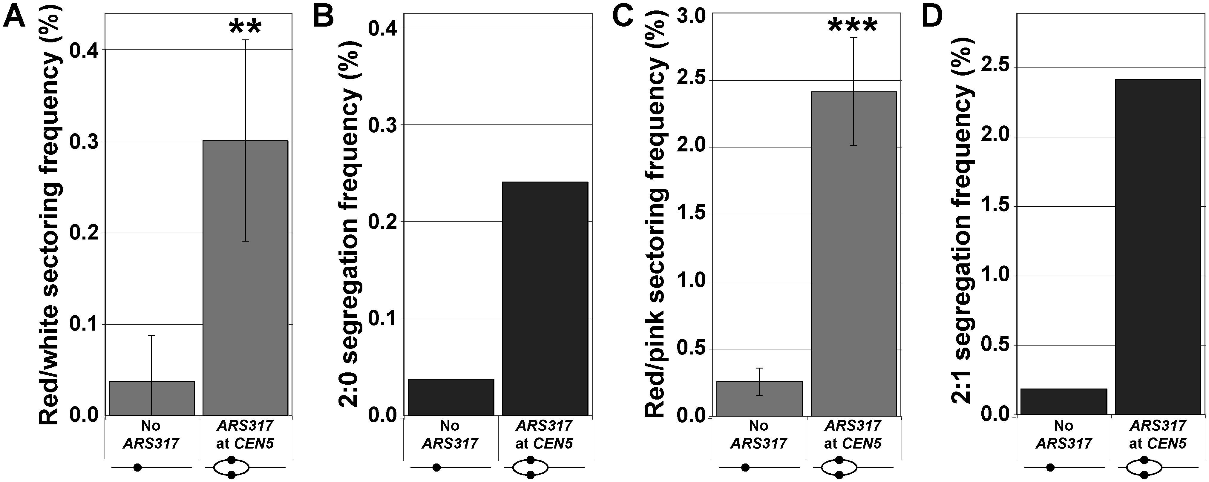 Centromeric re-replication induced in cycling cells causes 2:0 and 2:1 segregation.