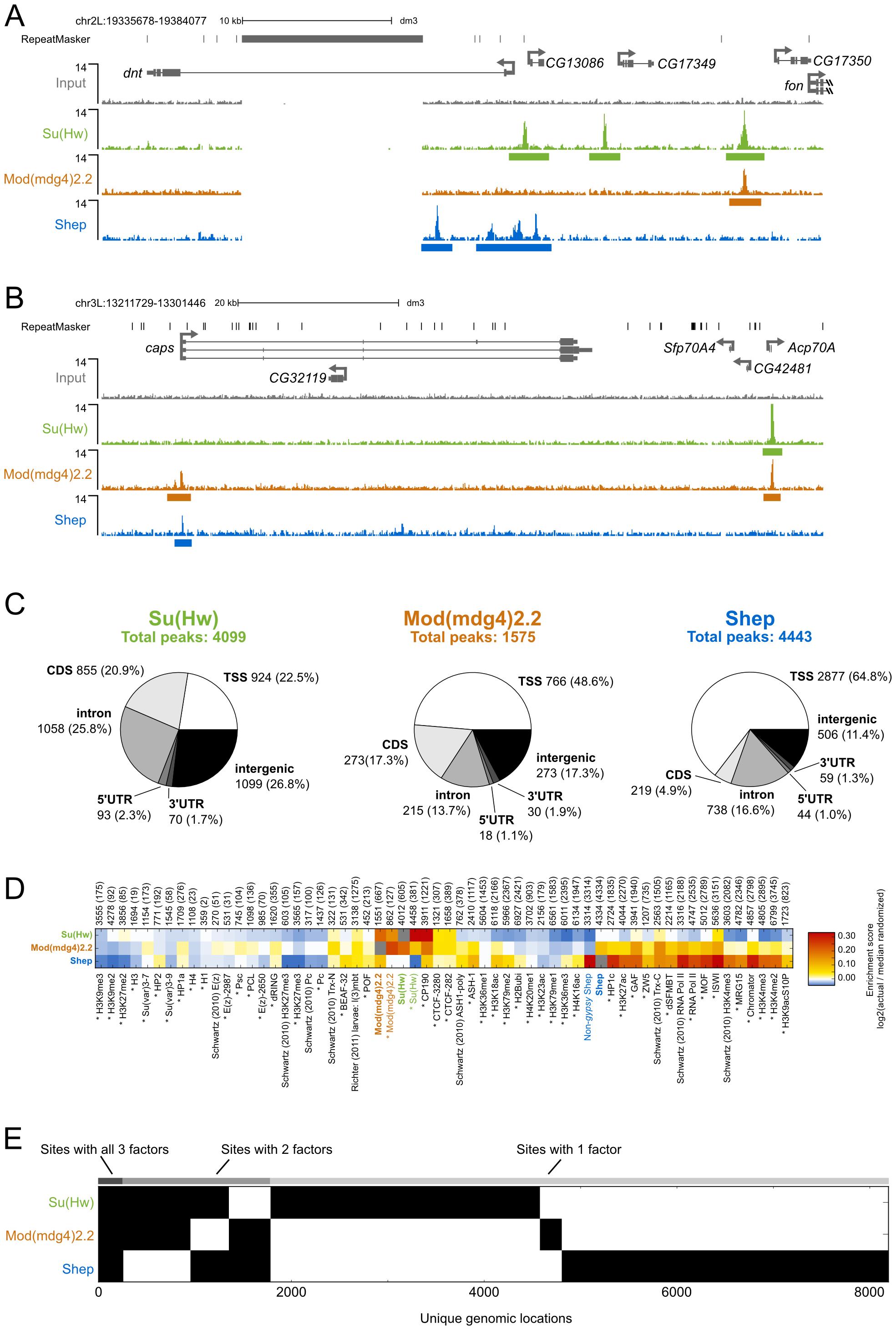 Comparison of Su(Hw), Mod(mdg4)2.2, and Shep ChIP–seq profiles in BG3 cells.