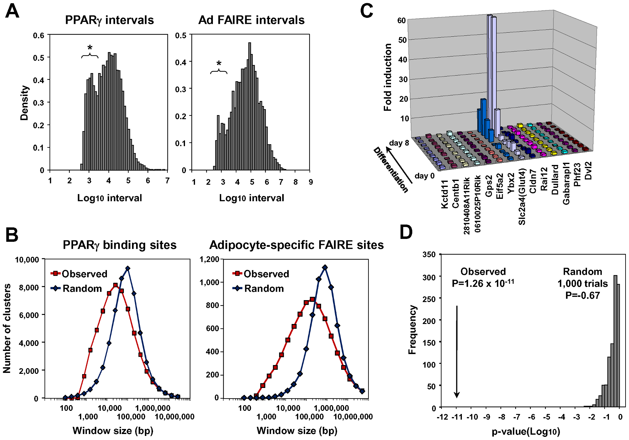 Statistical analyses for clustering of adipocyte-specific FAIRE peaks and PPARγ binding sites and co-regulation of neighbor genes during adipogenesis.