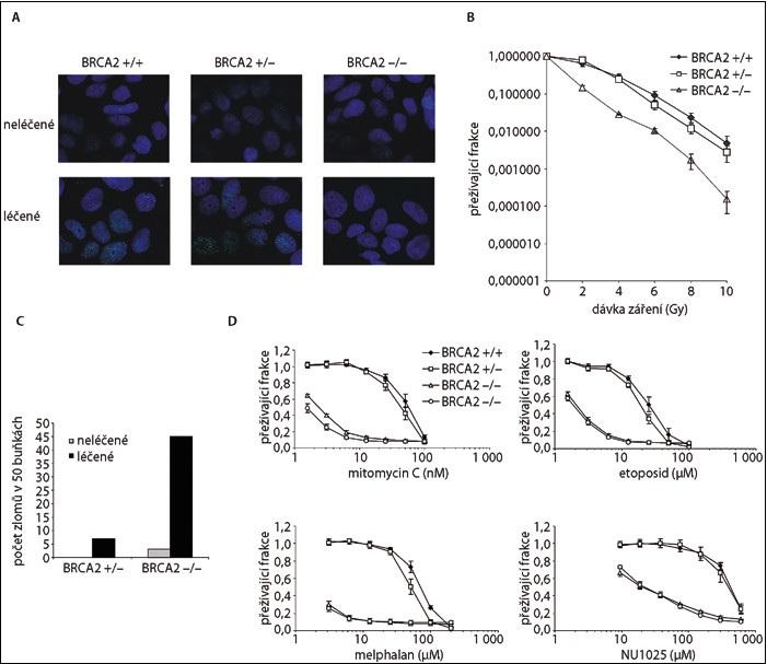 Funkční testy BRCA2.