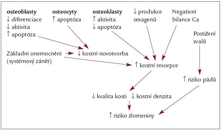 Schéma 1.Patogeneze glukokortikoidní osteoporózy a zlomenin.