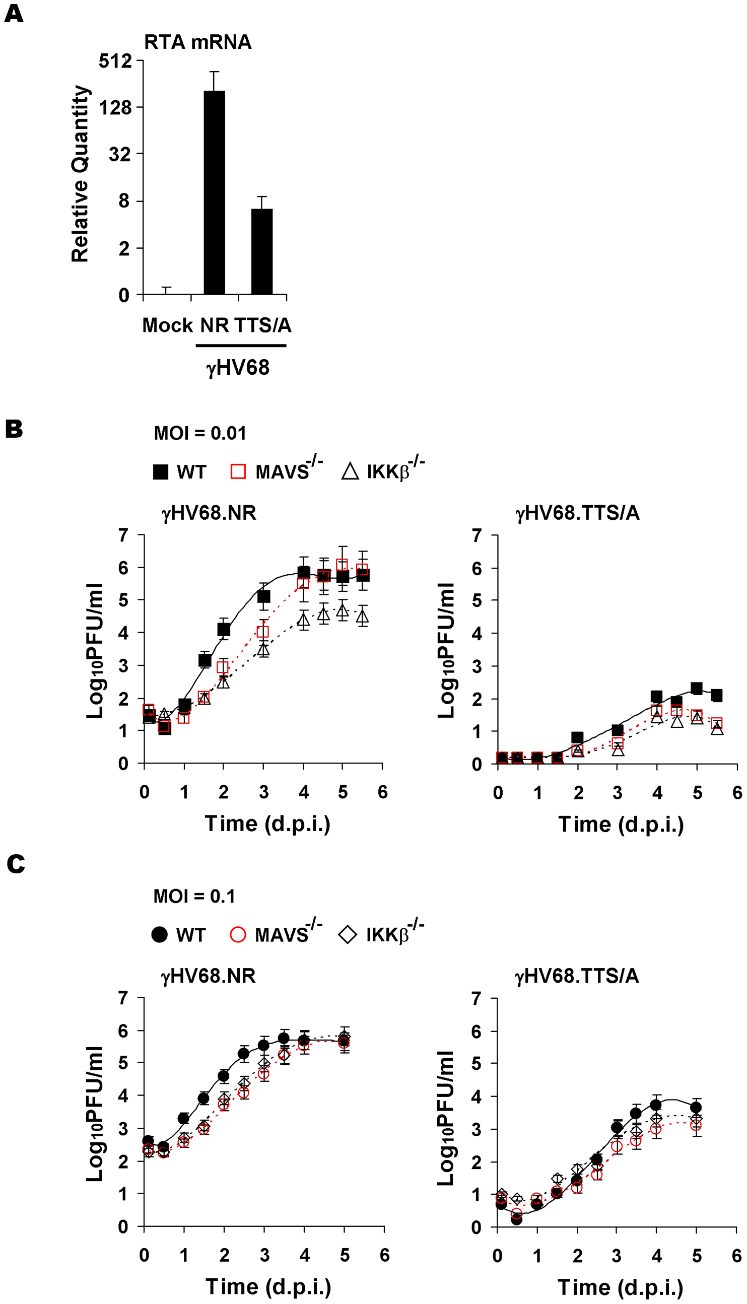 Impaired lytic replication of recombinant γHV68 carrying the TTS/A mutation.