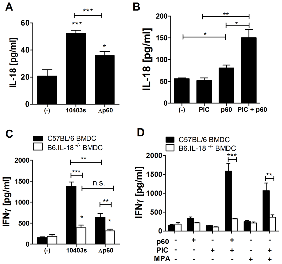 IL-18 produced by BMDCs is required for p60-elicited IFNγ from NK cells in co-culture.